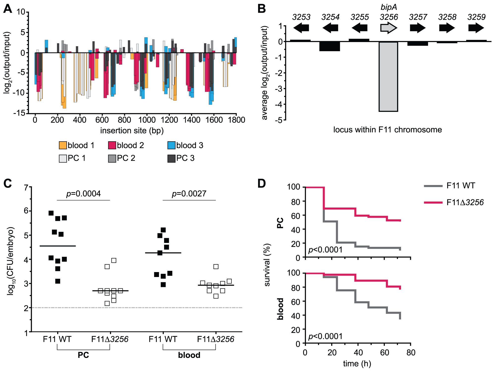 Retrospective deletion of the candidate gene <i>EcF11_3256/bipA</i> confirms Tn-seq as a useful tool for the identification of loci required for fitness and virulence.