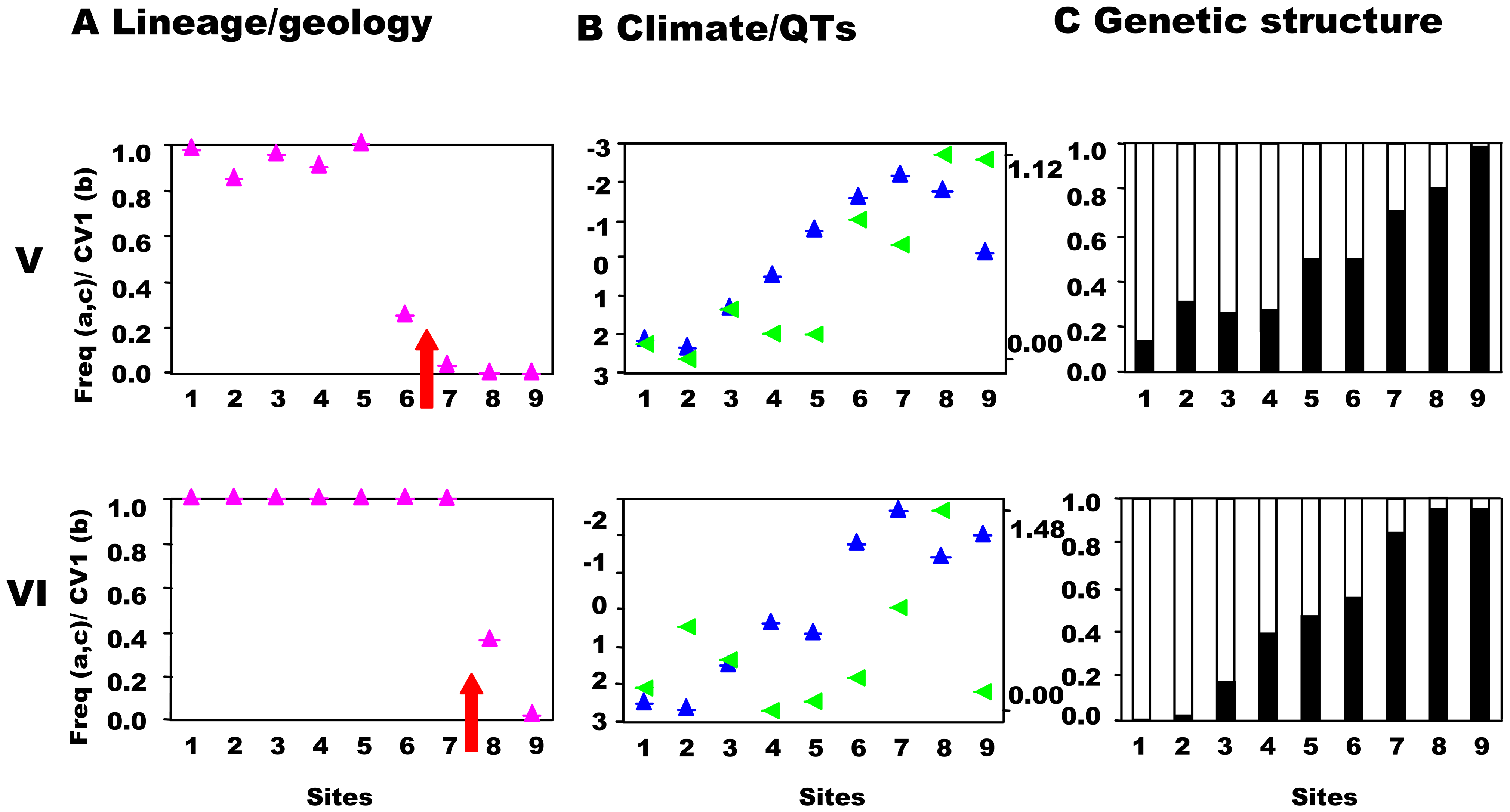 Southwest-central precursor islands: lineages, quantitative traits, and genetic structure along transects.