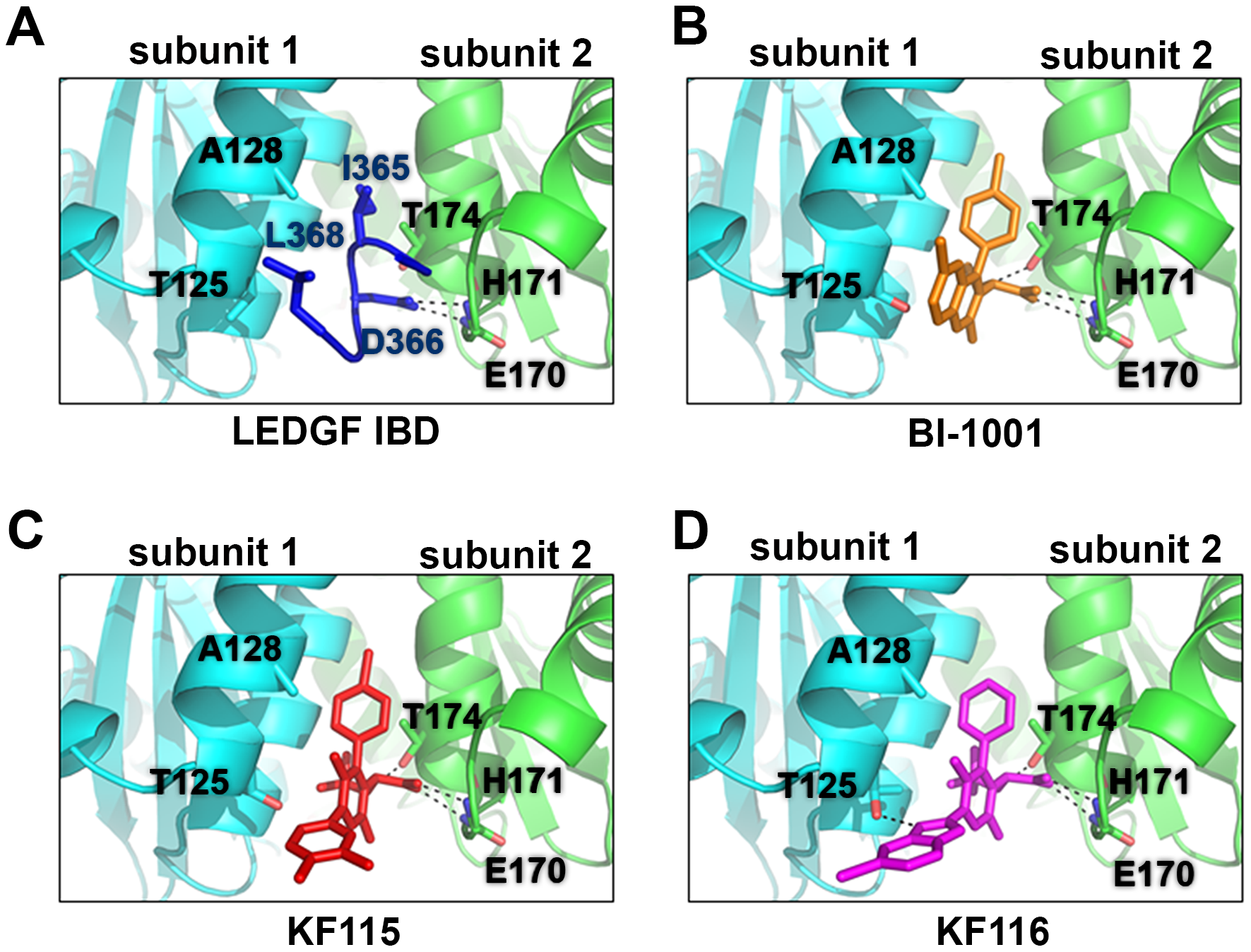 Crystal structures of LEDGF/IBD (A), BI-1001 (B), KF115 (C), and KF116 (D) bound to HIV-1 IN CCD.