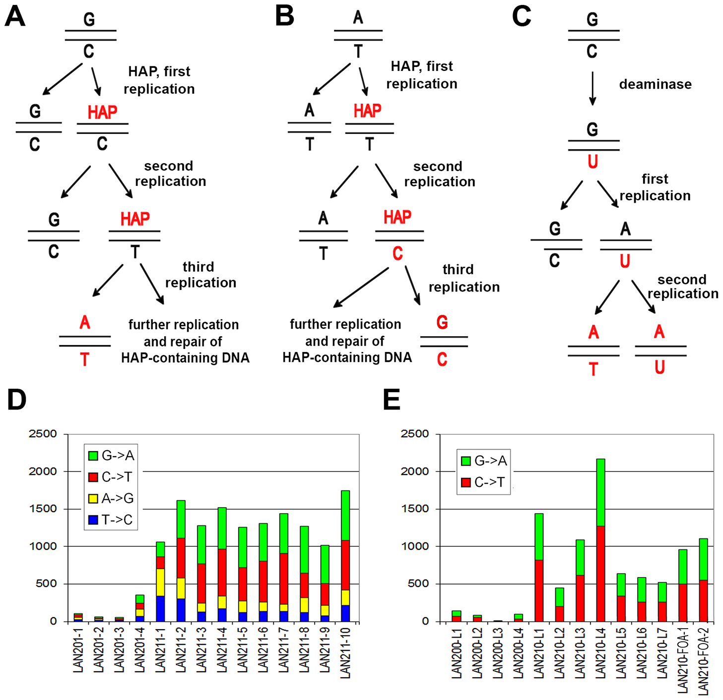 Induction of mutations by HAP and PmCDA1.