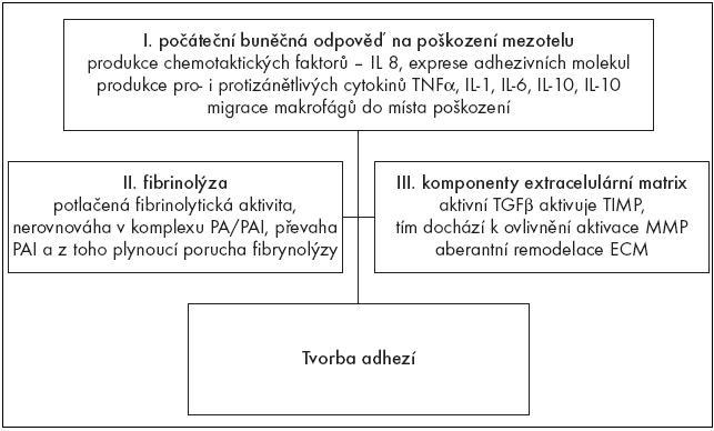 Schéma 2. Přehled základních mechanizmů při tvorbě adhezí.