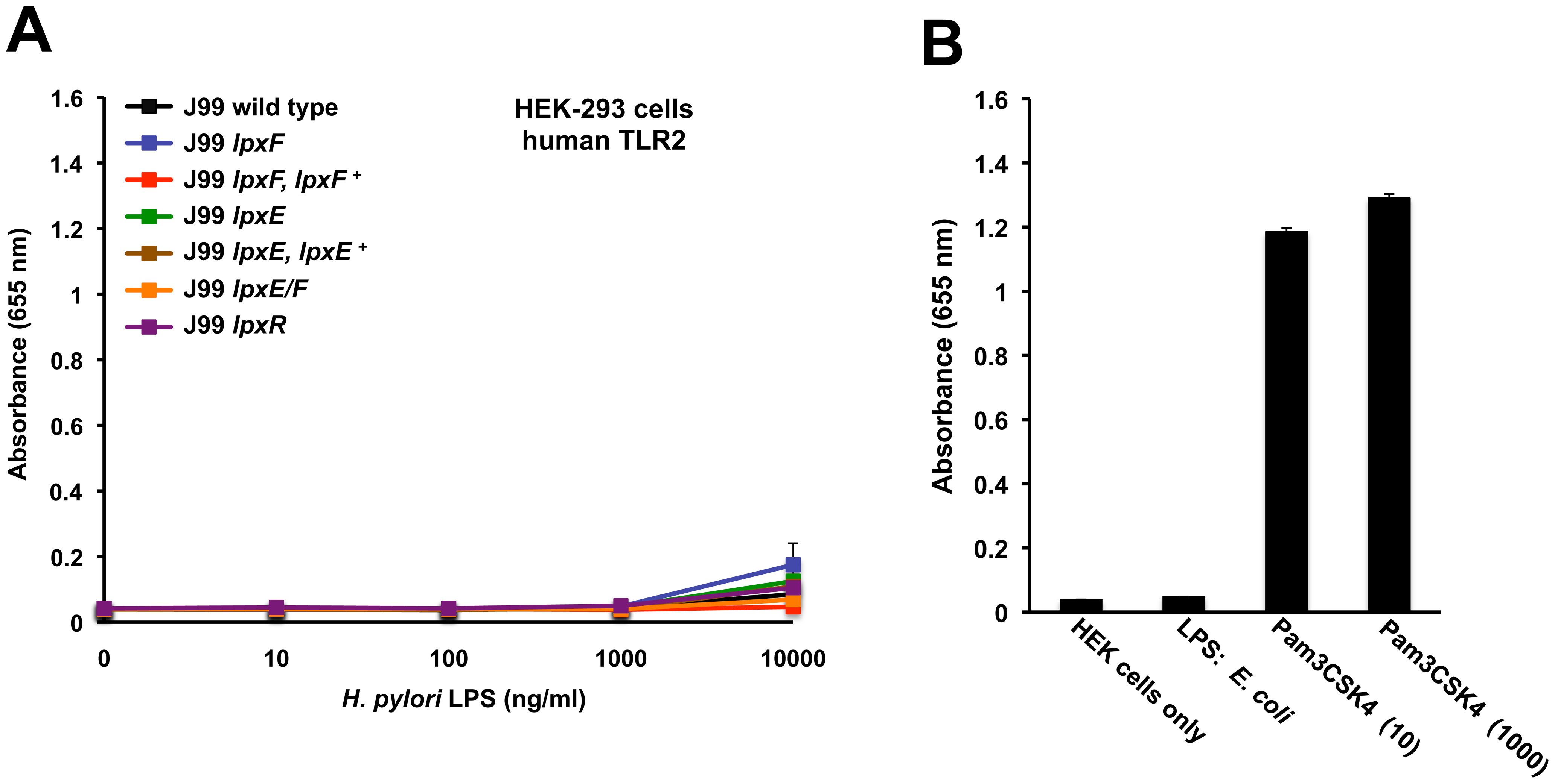 Activation of hTLR2 by <i>H. pylori</i> LPS.