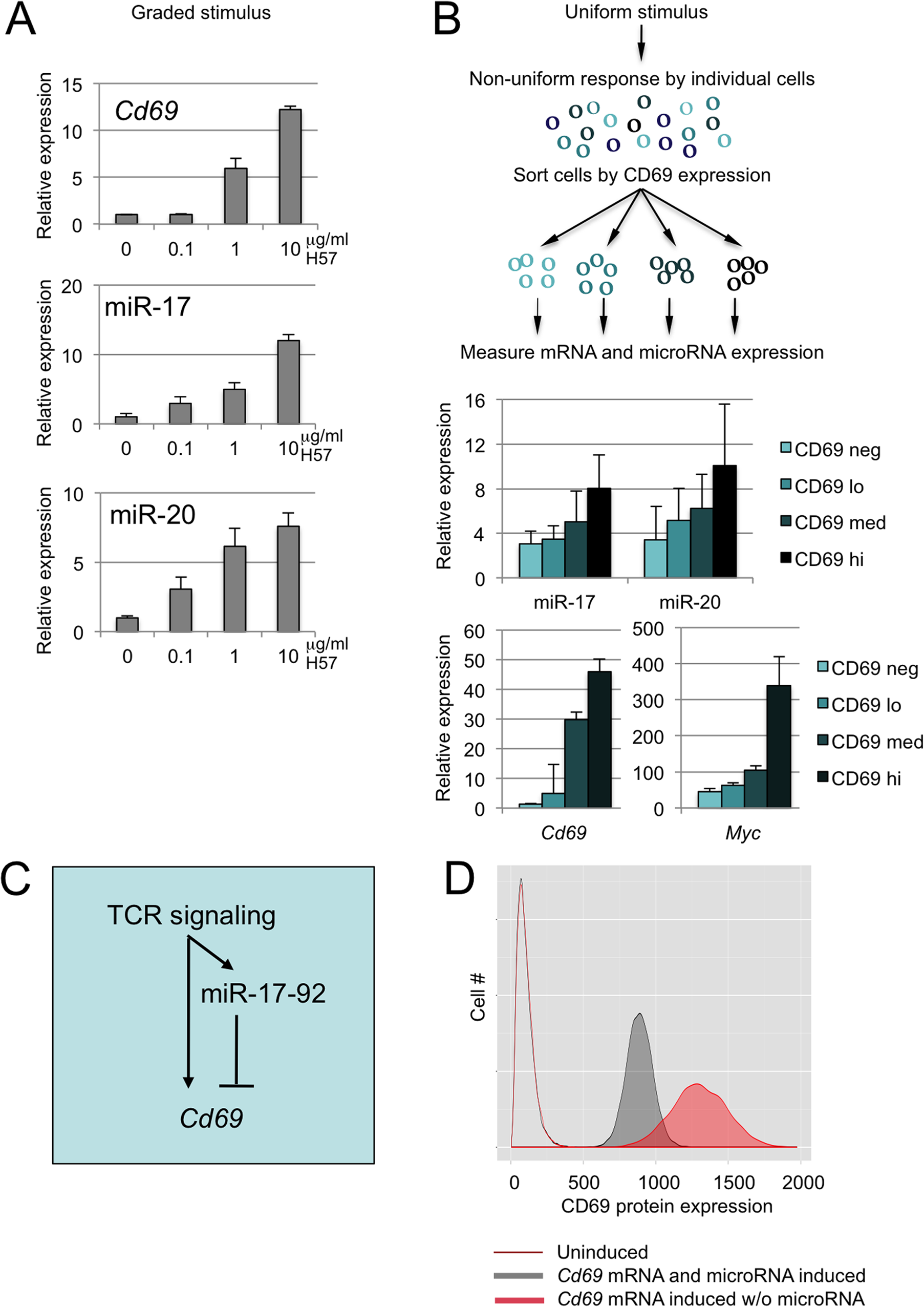 miR-17 and miR-20 form an incoherent positive feedback loop with the target mRNA <i>Cd69</i>.