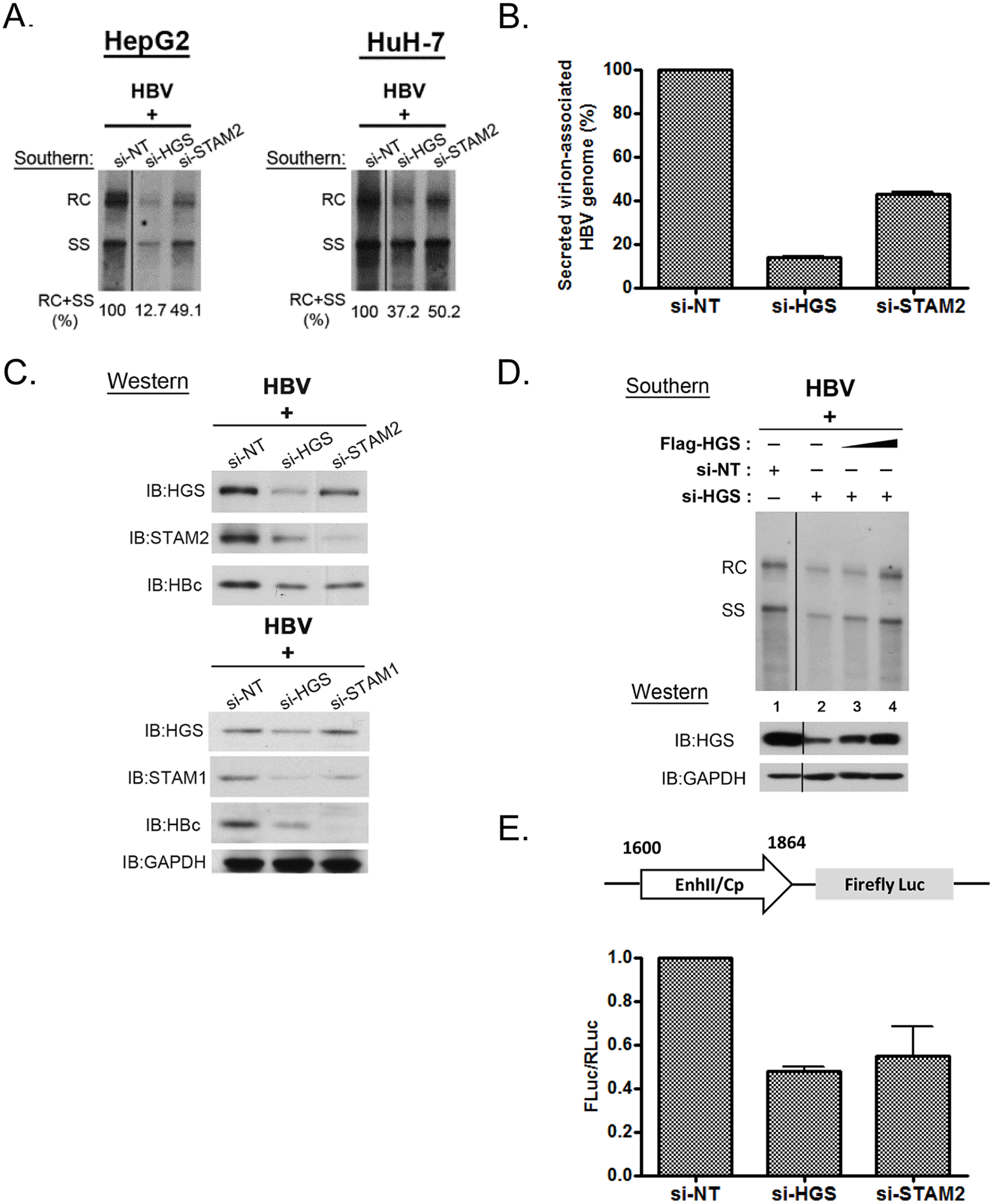 Knockdown of HGS destabilized ESCRT-0 complex and inhibited core protein expression and HBV replication.