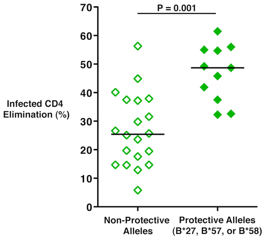 HIV-specific CD8<sup><b>+</b></sup> T-cell cytotoxic capacity in Ad5/HIV vaccine recipients was higher among individuals with protective HLA class I alleles.