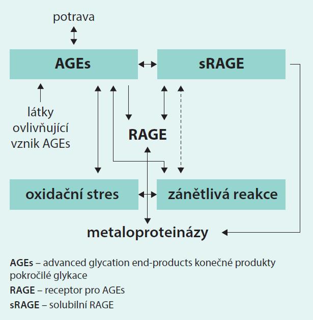 Schéma 2. Souvislost AGEs – RAGE – sRAGE