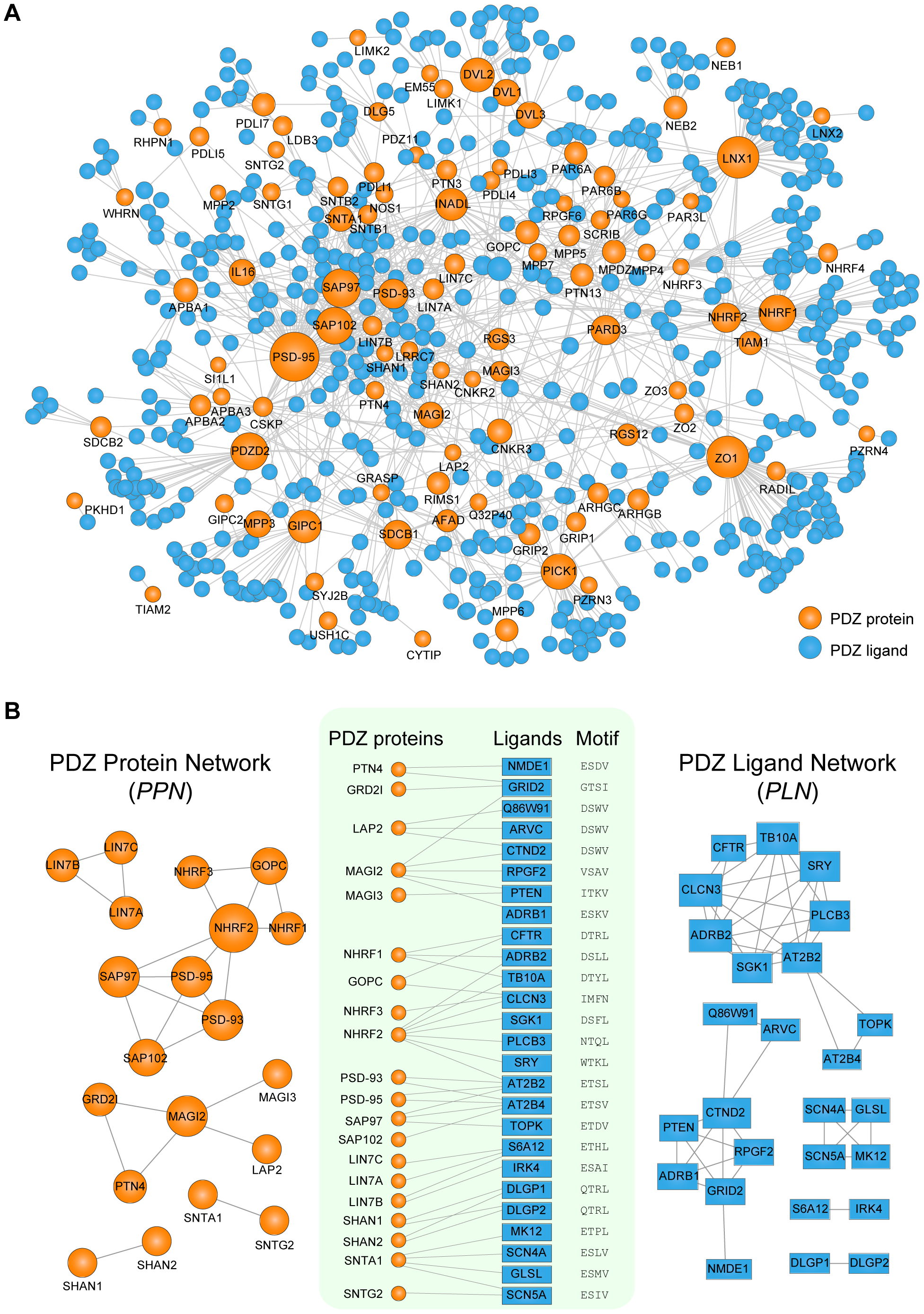 Network analyses of human PDZ protein-ligand interactions.
