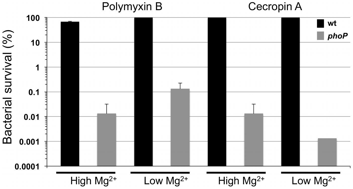 Resistance to polymyxin B and cecropin A is PhoP-dependent in <i>S. glossinidius.</i>