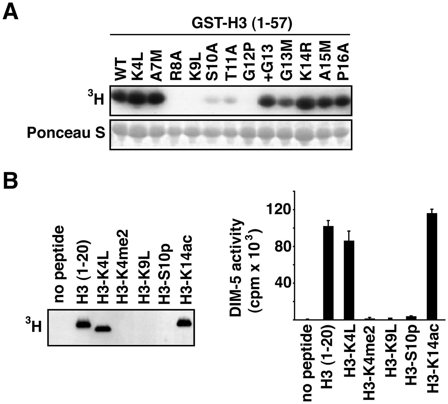DIM-5 activity on histone H3 peptides.