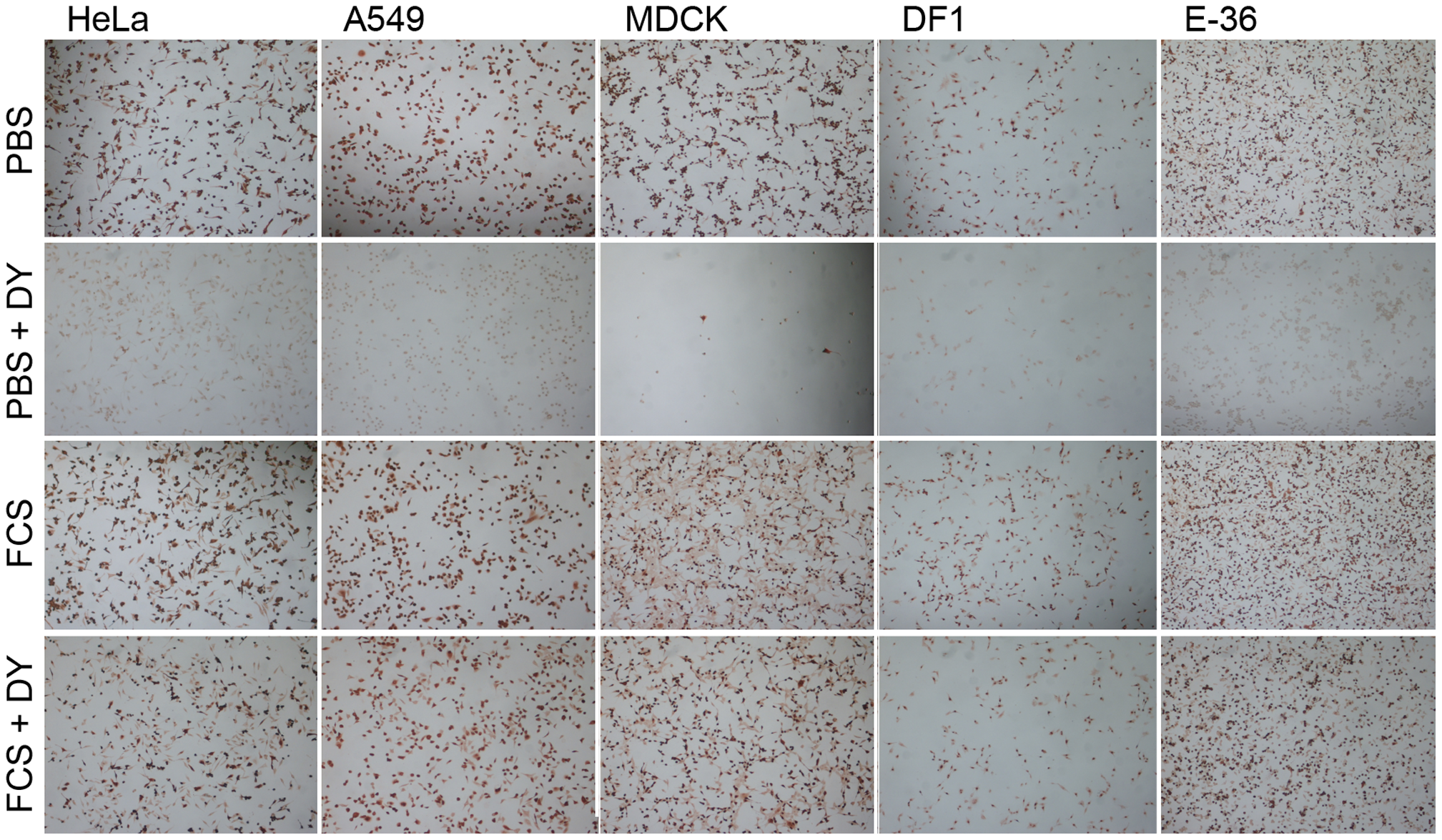 Serum-inducible DYNA-IND IAV entry in different cell types.