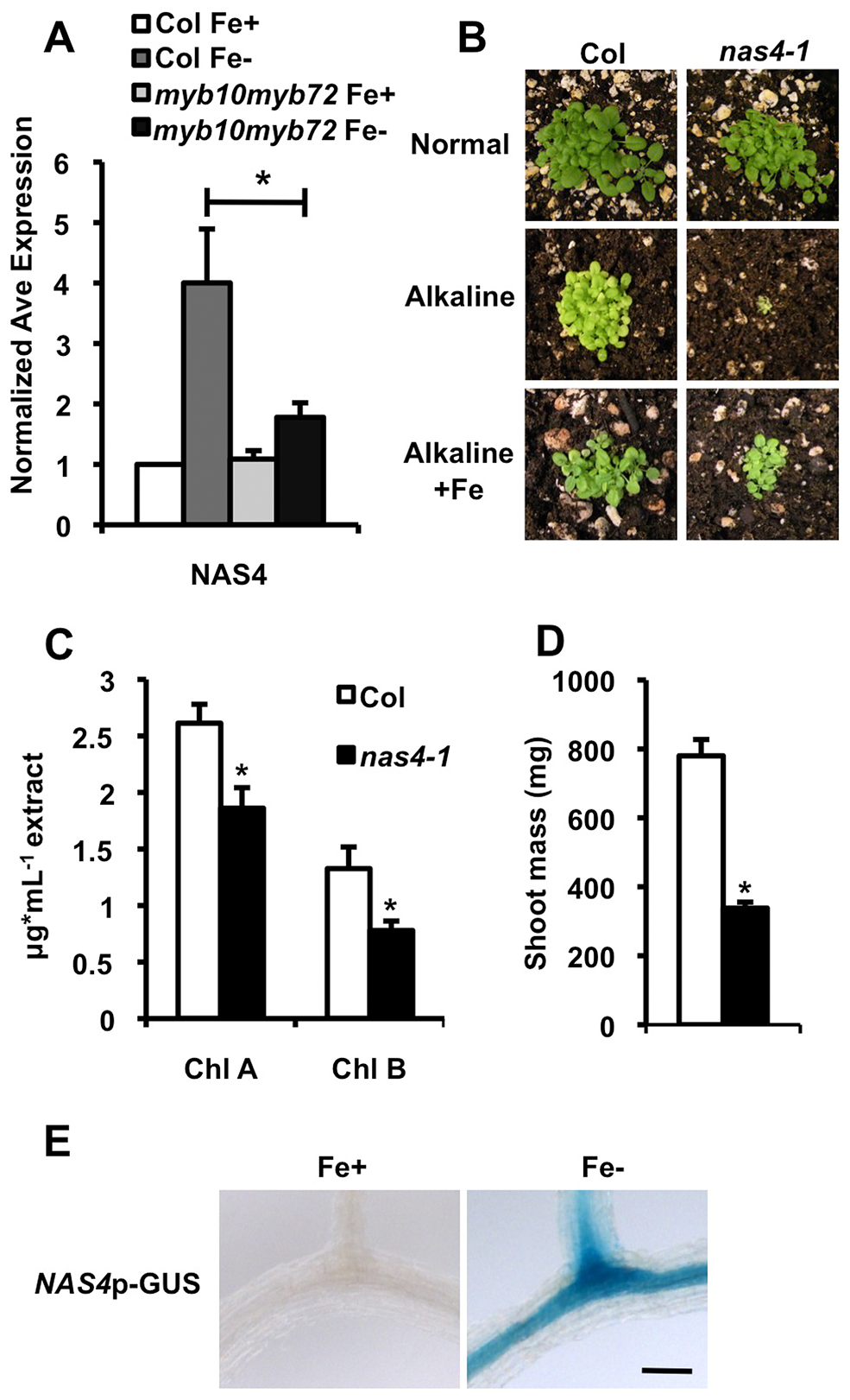 <i>nas4-1</i> mutants are sensitive to alkaline soil.