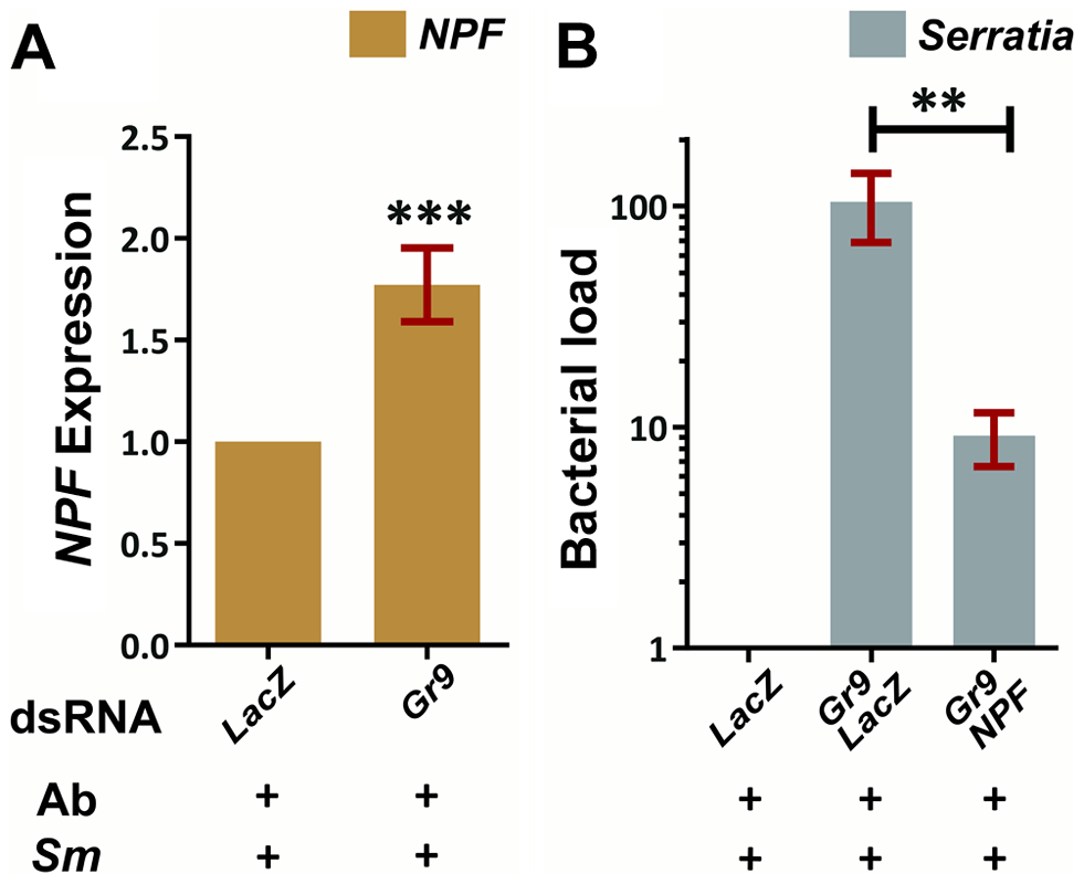 The Gr9 antibacterial effect mostly relies on changes in <i>NPF</i> expression.