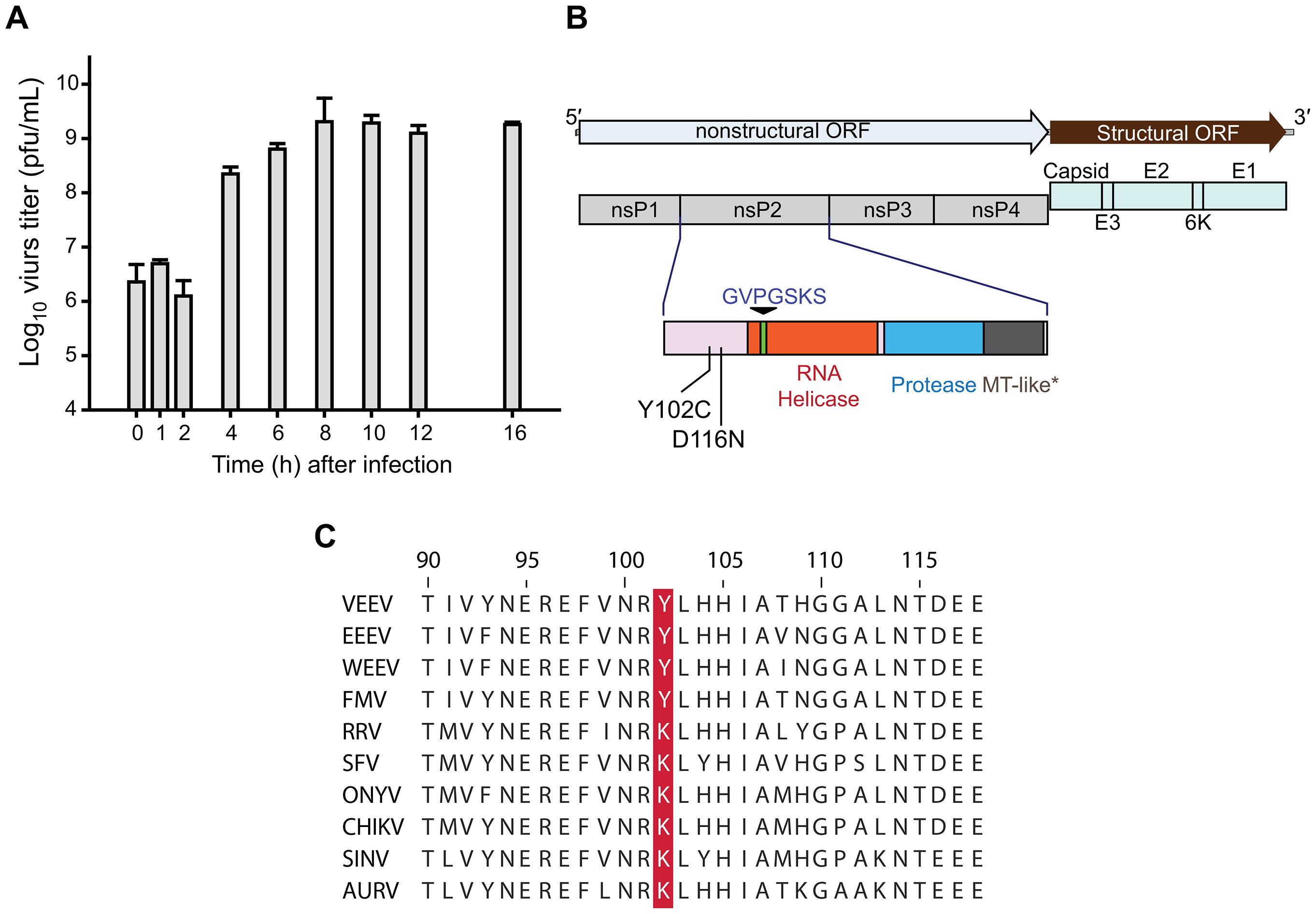 CID15997213 targets viral nsP2.