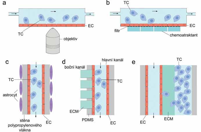 Schematické znázornění fluidních systémů pro detekci TEM. A. Paralelní fluidní model, boční pohled; B. transwell průtokový systém, boční pohled; C. kapilární fluidní model krevně-mozkové bariéry, pohled shora; D. kapilární mikrofluidní zařízení pro sledování extravazace, pohled shora; E. kapilární mikrofluidní systém pro sledování intravazace, pohled shora. TC – nádorová buňka, EC – endoteliální buňka, PDMS – polydimetylsiloxan, ECM – extracelulární matrix