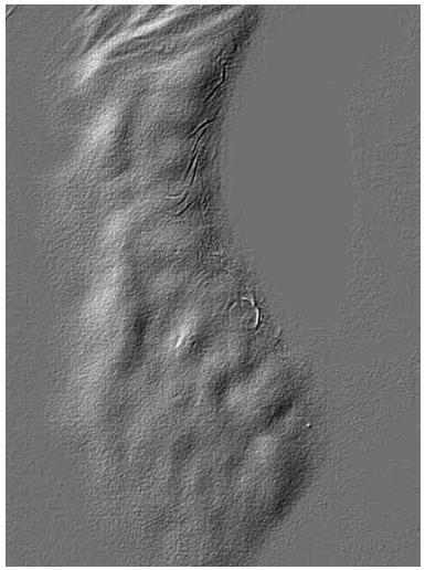 Fingerprints – otiskové změny