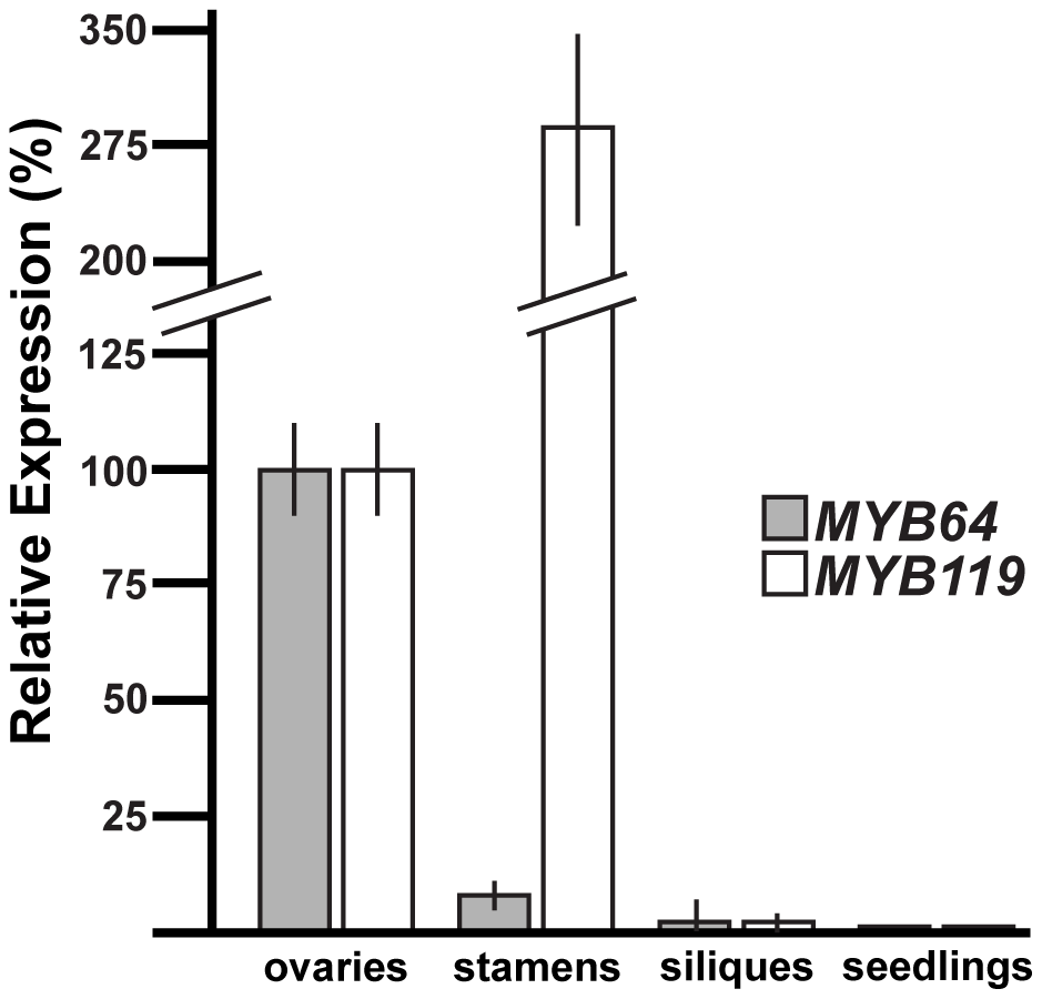 qRT-PCR analysis of <i>MYB64</i> and <i>MYB119</i> expression.
