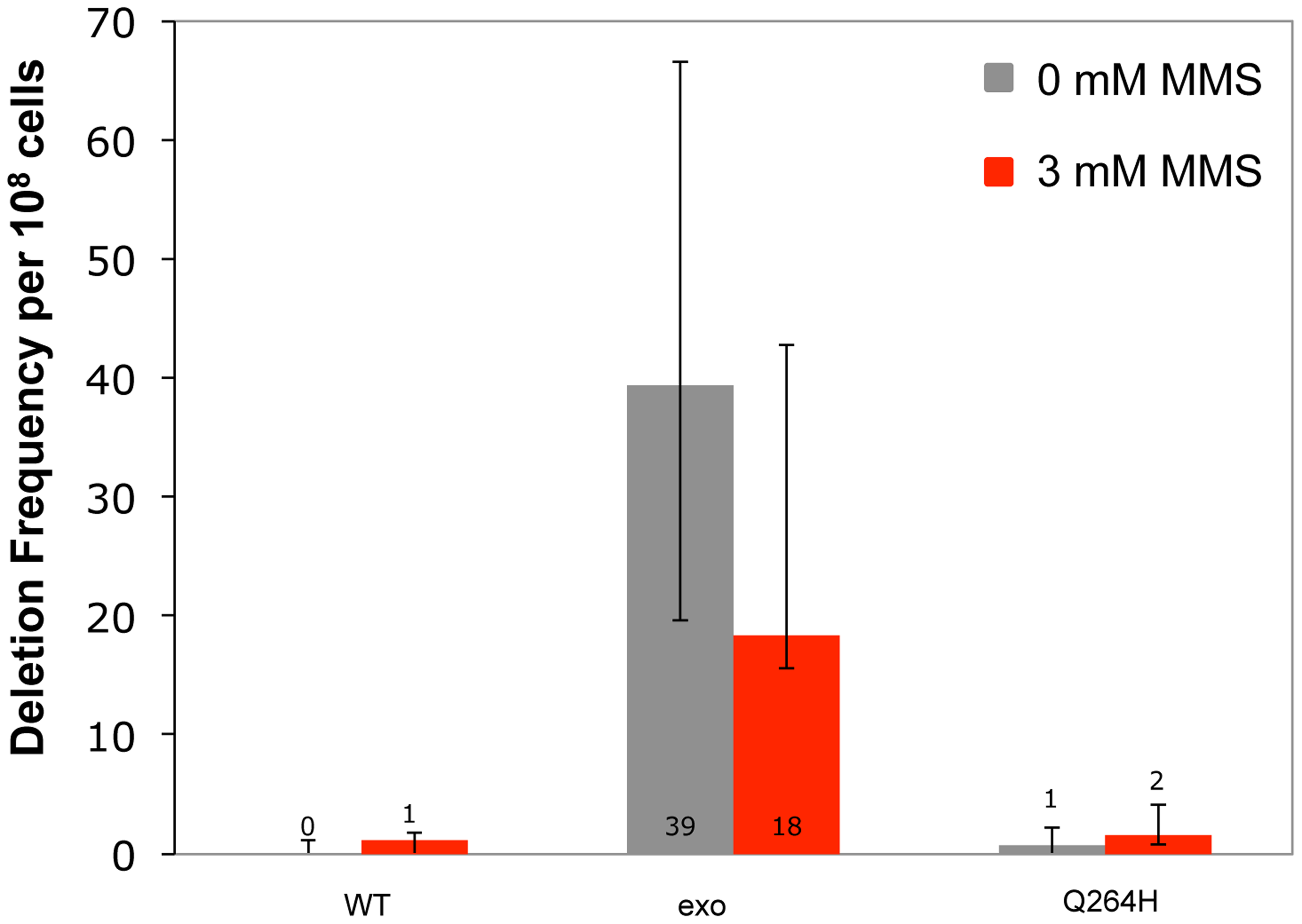Methyl methanesulfonate exposure has no significant effect on deletion mutations between 21mer repeats.