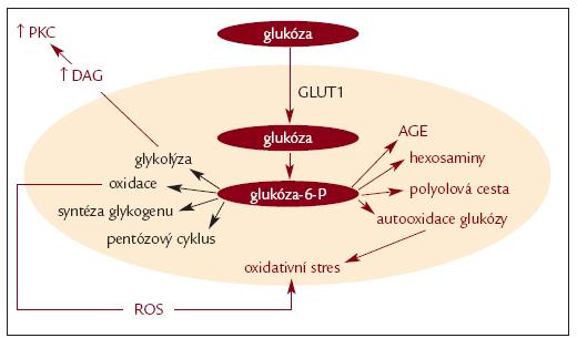 Schéma 3. Intracelulární metabolizmus glukózy.