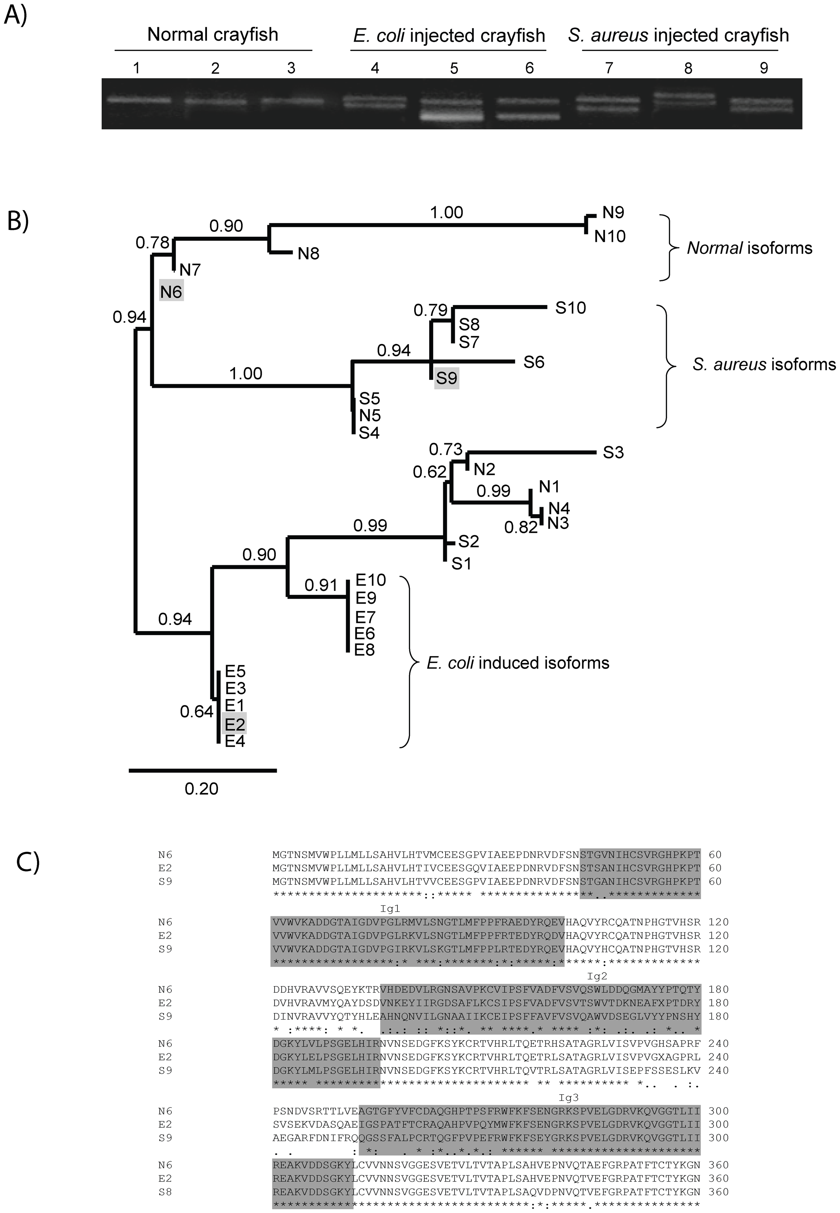 Bacteria-induced <i>Pl</i>Dscam isoforms.