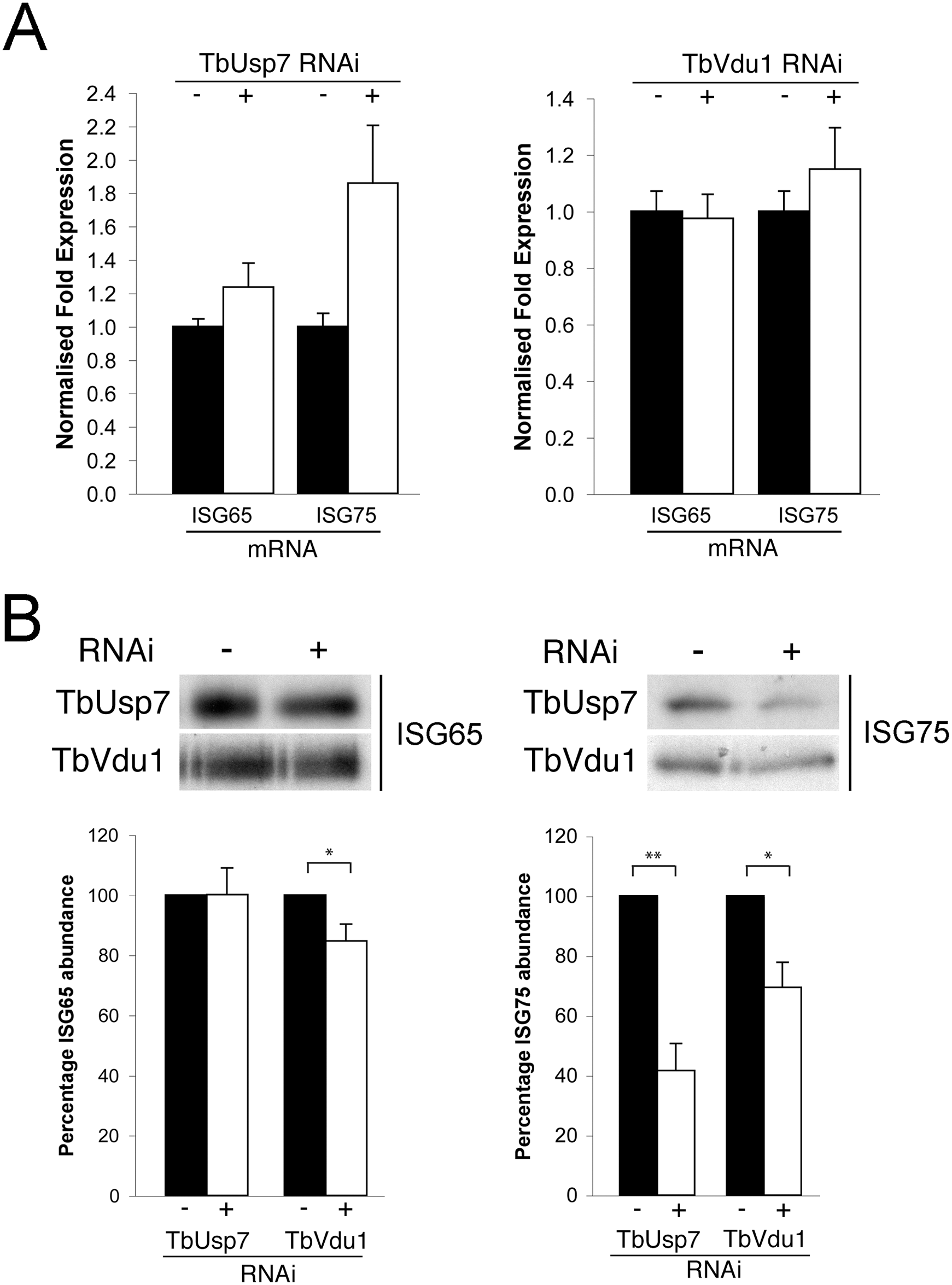 Assessment of ISG65 and ISG75 transcription and biosynthesis under TbUsp7 and TbVdu1 knockdown.