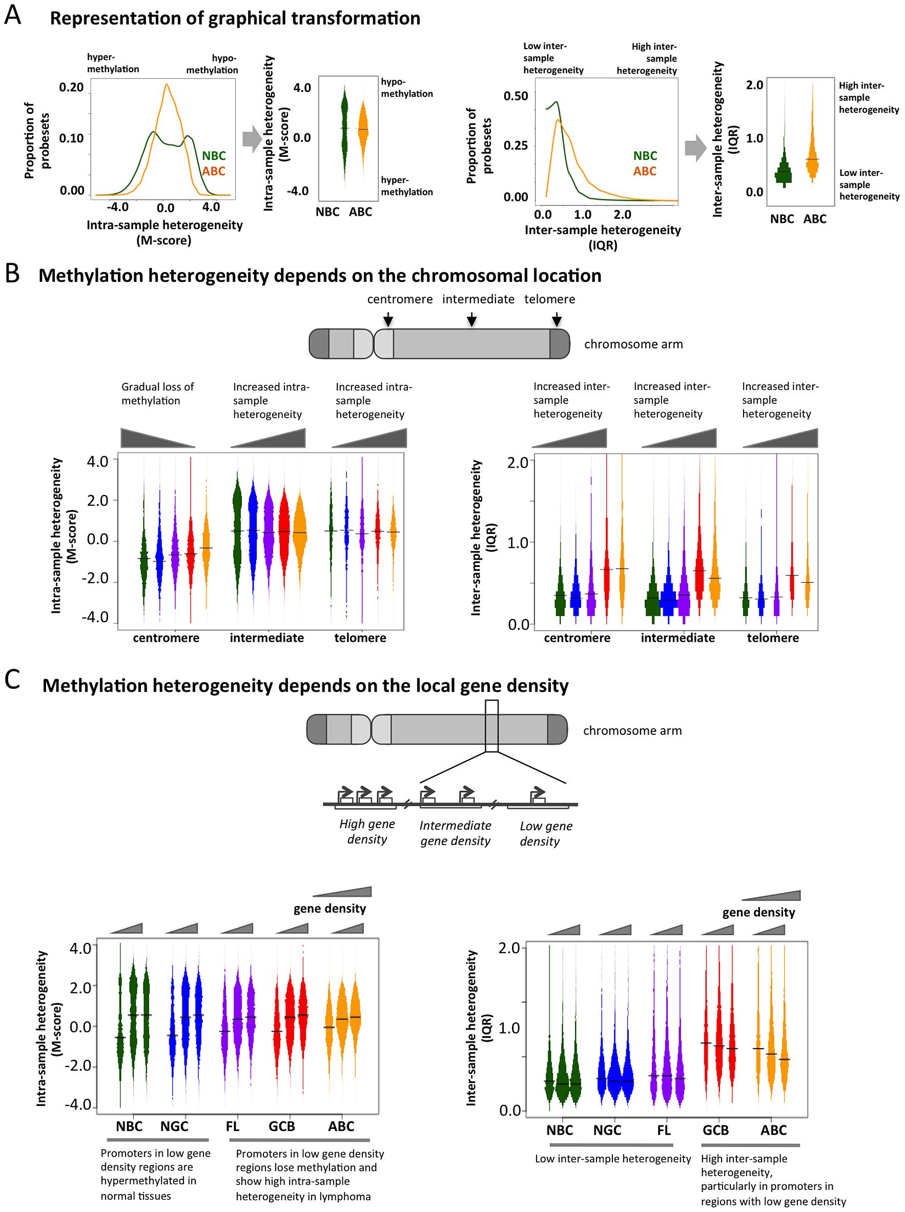 Genome-wide patterns of aberrant methylation.