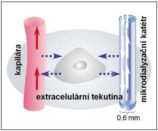 Princip funkce mikrodialyzačního katétru. Mikrodialyzační katétr s dvojitým lumen napodobuje funkci cévy při výměně metabolitů s extracelulárním prostředím CNS.