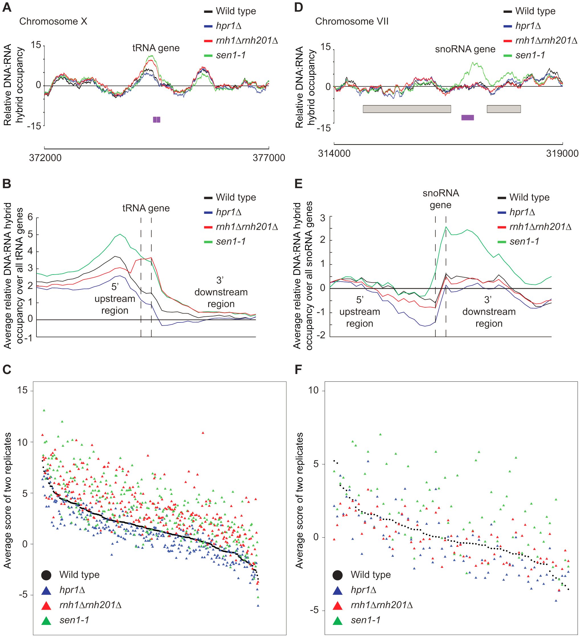 RNase H and Sen1 mutants displayed elevated levels of DNA:RNA hybrids at tRNA and snoRNA genes.