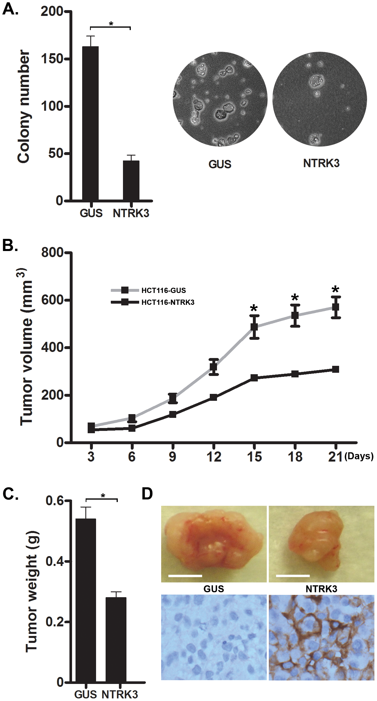NTRK3 suppresses <i>in vitro</i> soft agar colony formation (A) and tumor xenograft growth (B–D) of colon cancer cell lines.