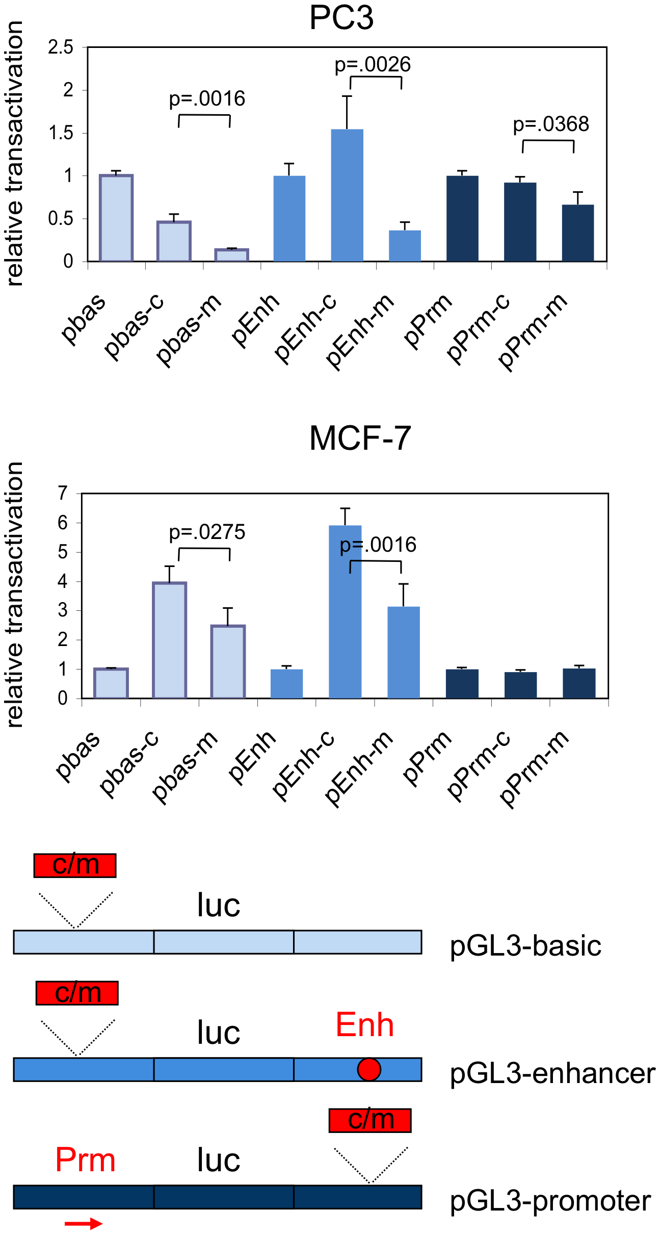 Relative transcriptional activation by the common and minor alleles of rs378854.