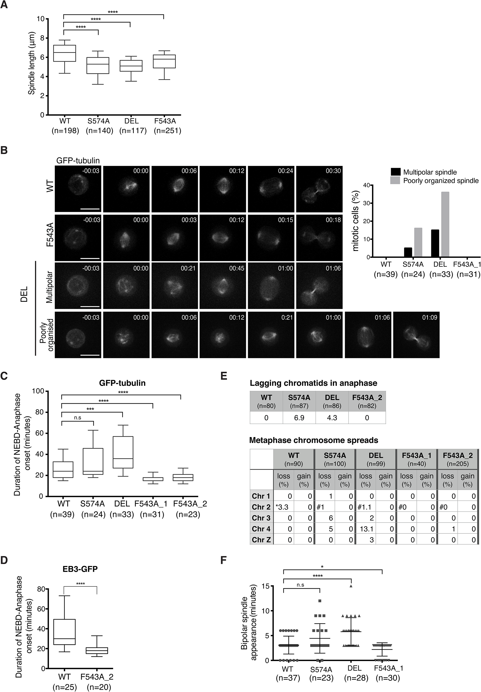 Spatially distinct residues in TACC3 dictate mitotic duration and fidelity.