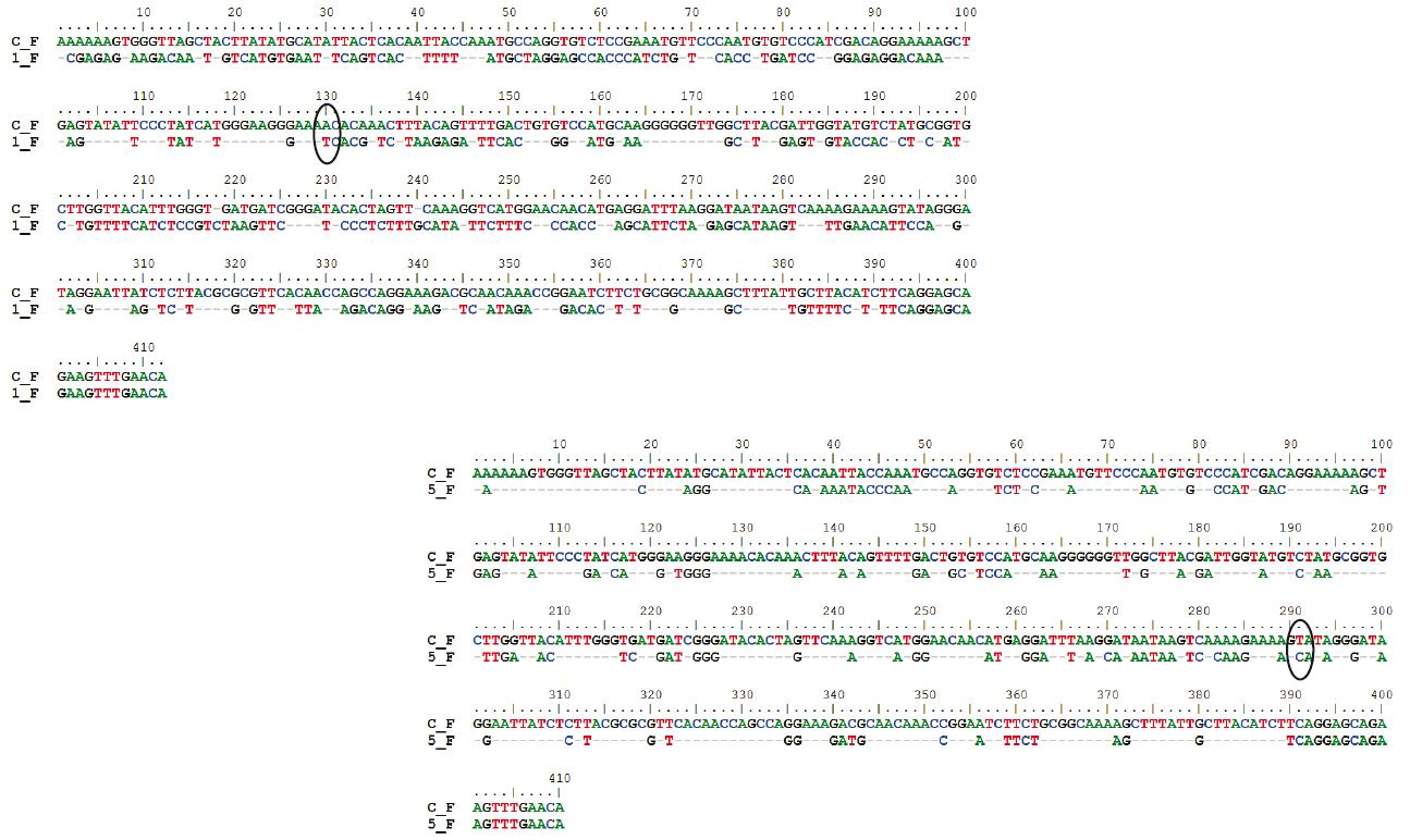 Fig. 3: The aligned nucleotide sequences of fragments of DNA of control MCF-7 cells (C_F) and docetaxel treated MCF-7 cells (1_F - 1 µM, 5_F - 250 µM) for forward primers.