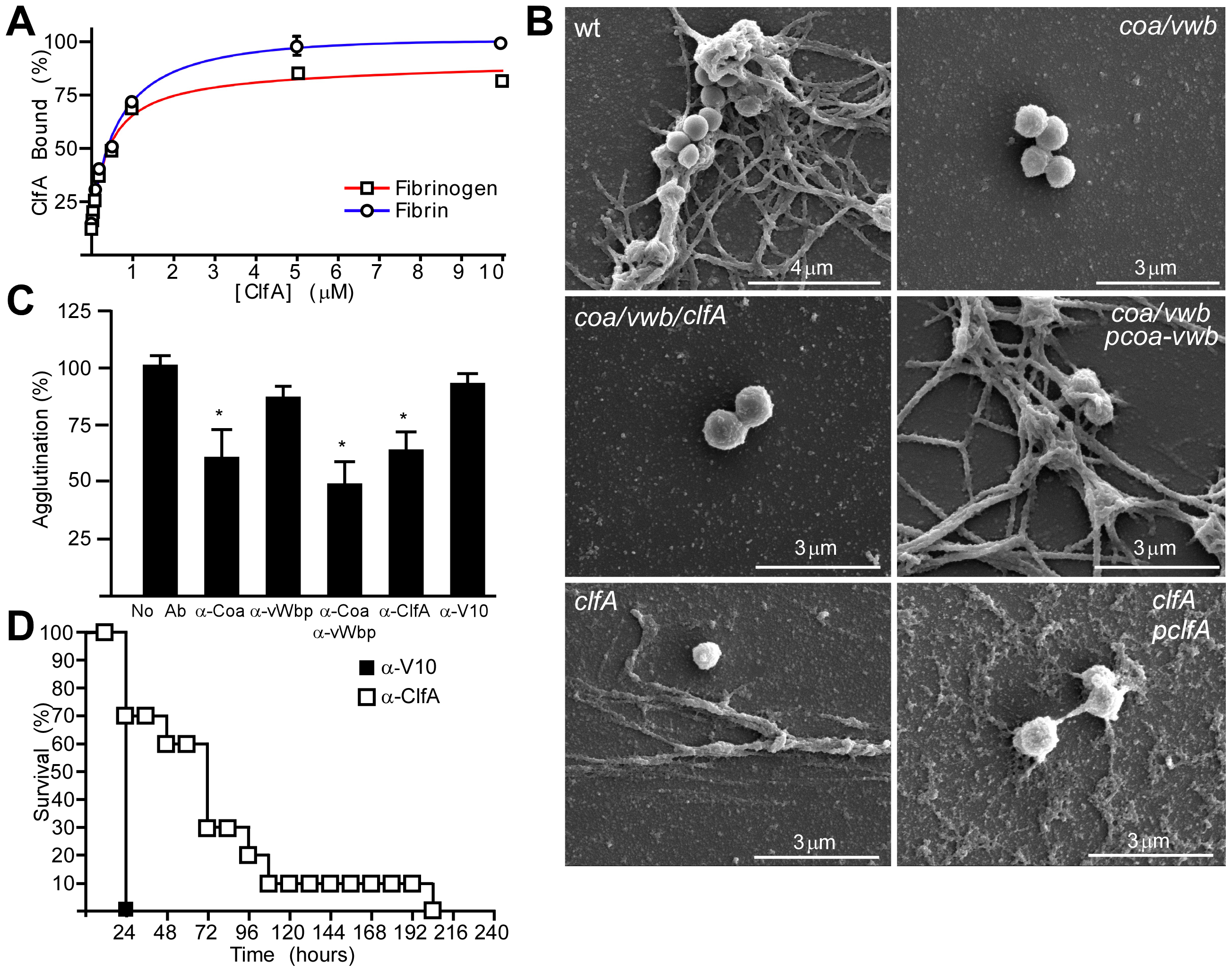 ClfA enables staphylococcal agglutination with fibrin cables <i>in vitro</i> and <i>in vivo</i>.
