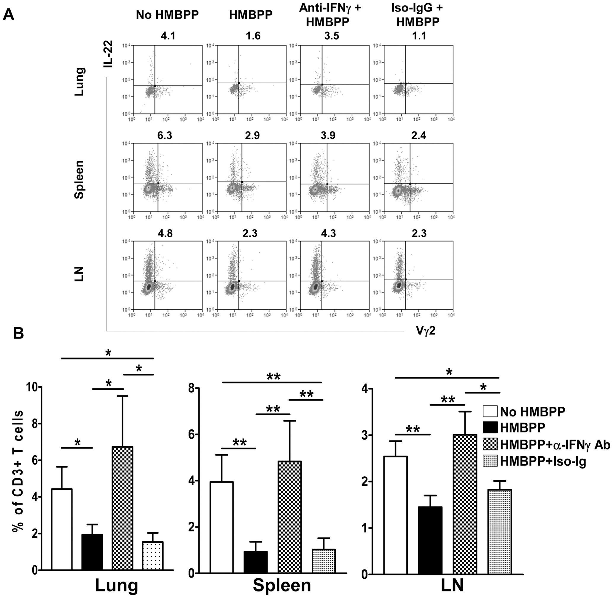 Anti-IFNγ neutralizing Ab treatment reversed the HMBPP-mediated down-regulation effect on IL-22-producing T cells.