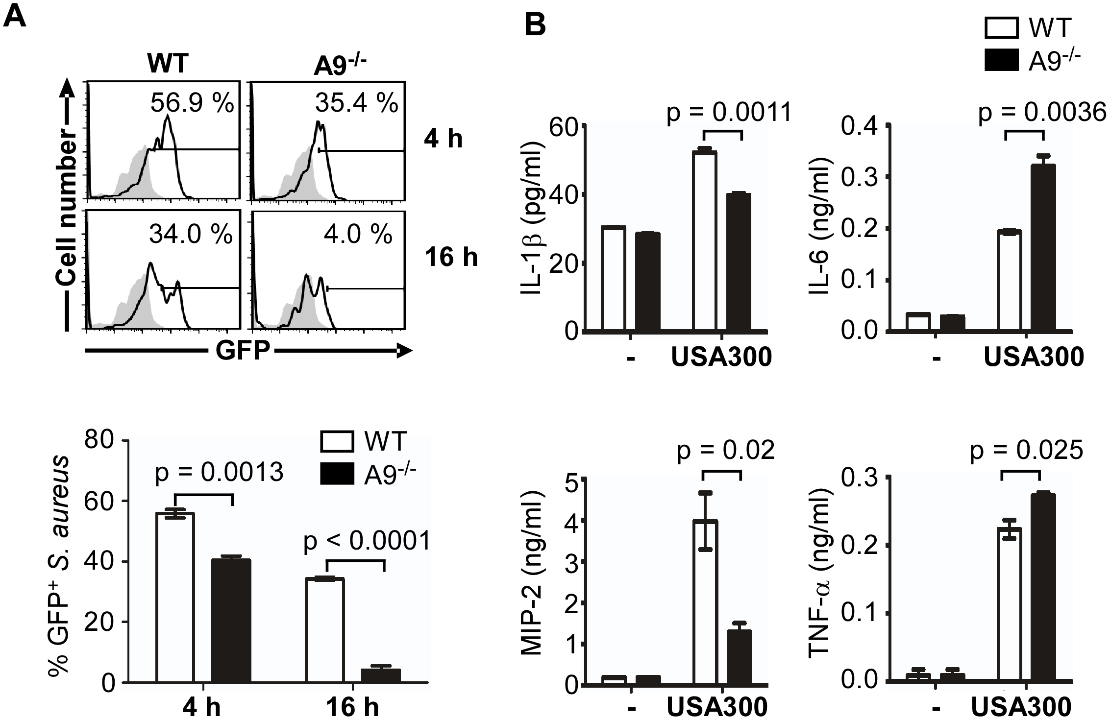 CP is required for full activation of the SaeRS TCS and cytokine production by murine neutrophils.