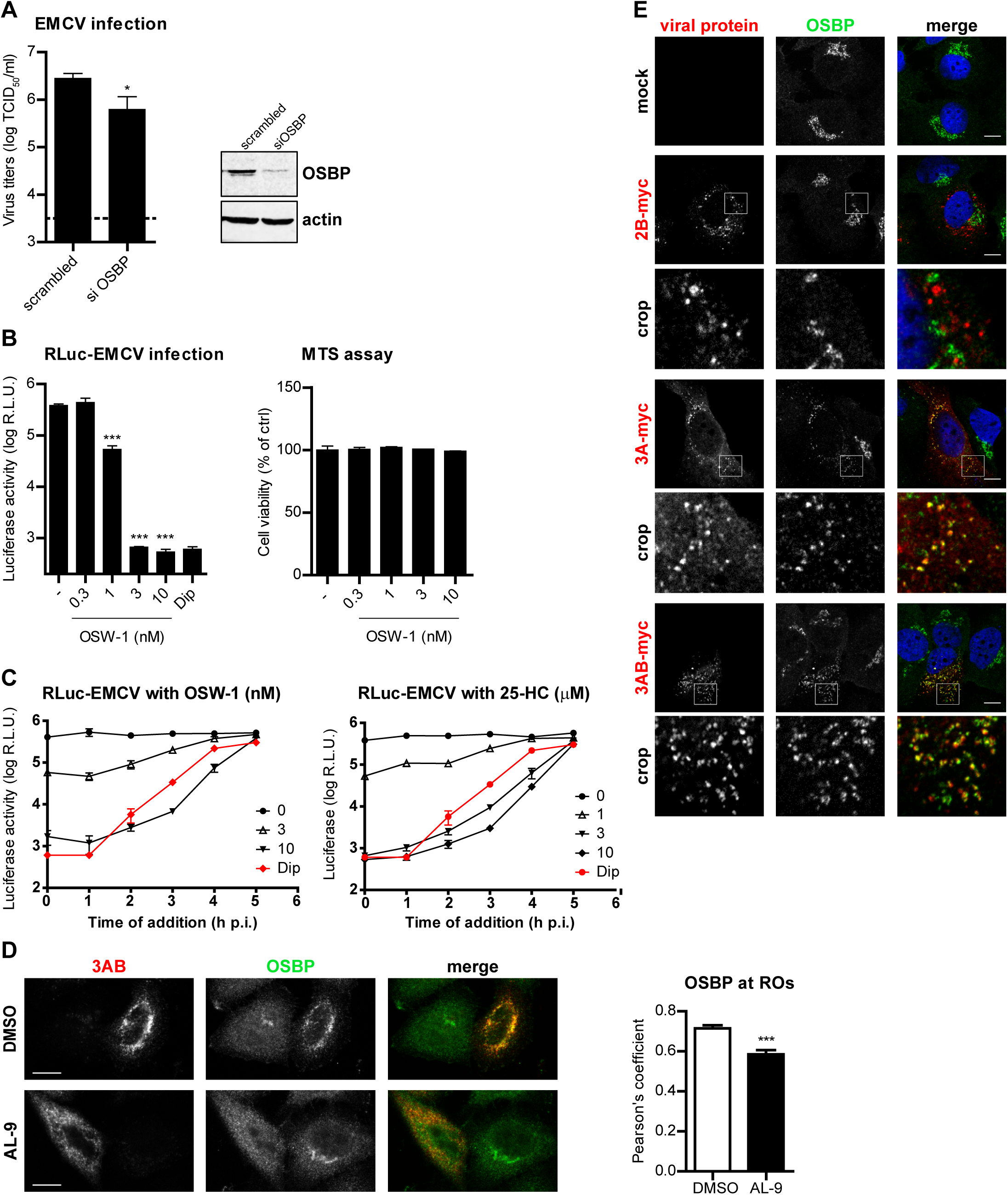 OSBP is a PI4KA effector important for EMCV replication.
