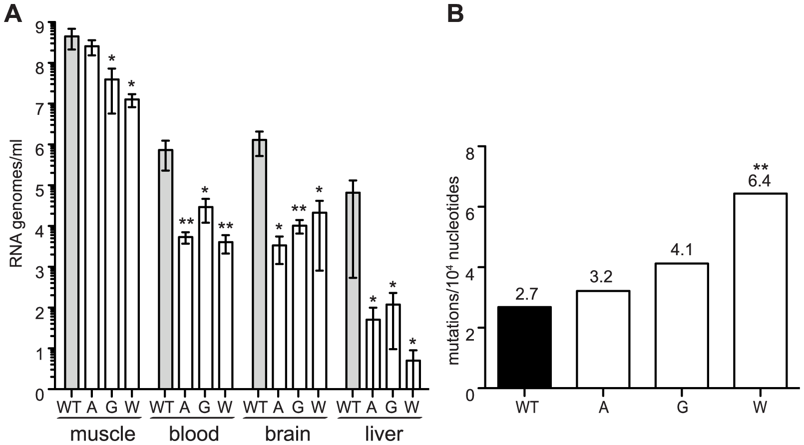Mutator variants 483A, G, and W are attenuated in mice.