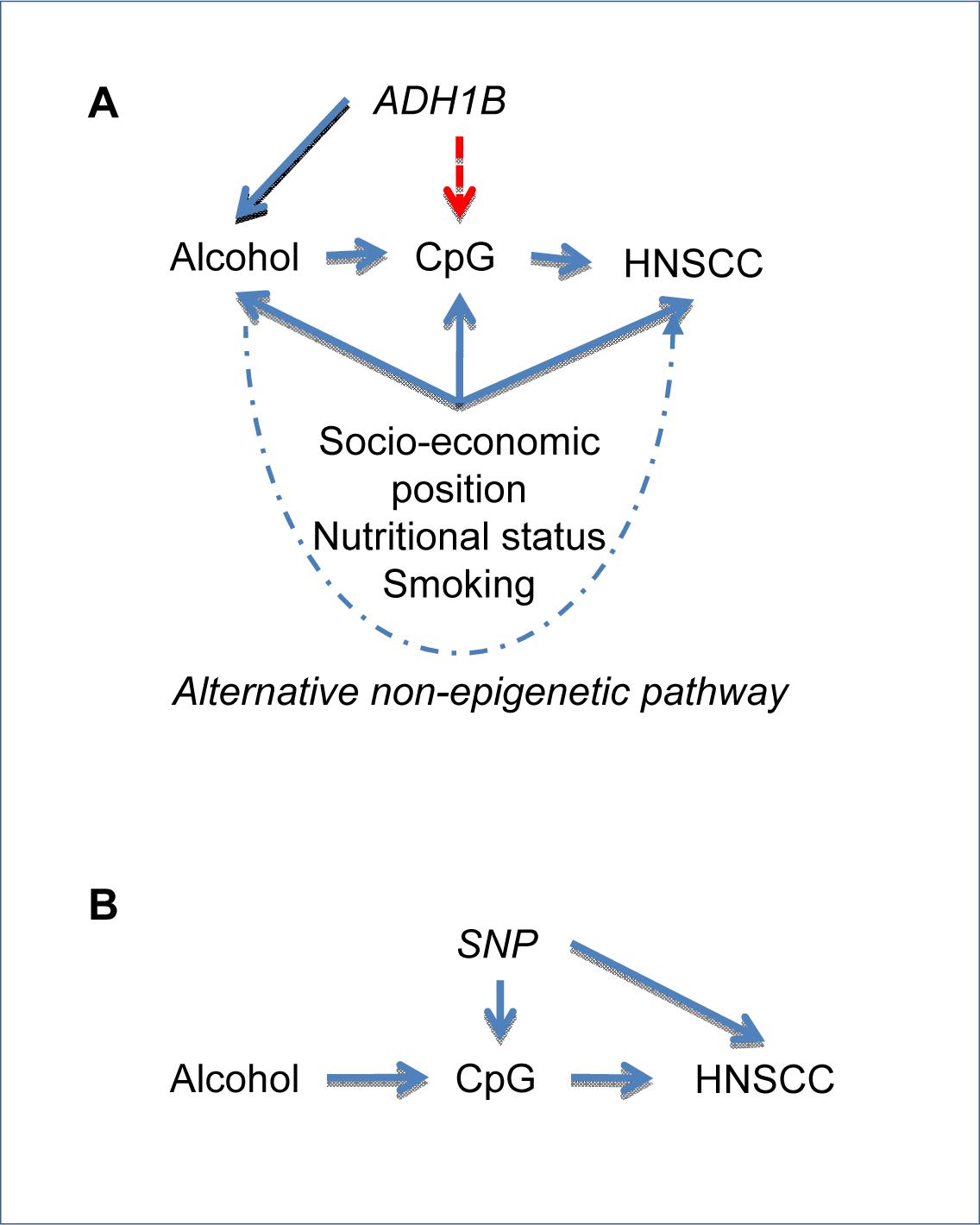 Incorporating epigenetic information in a Mendelian randomization framework.