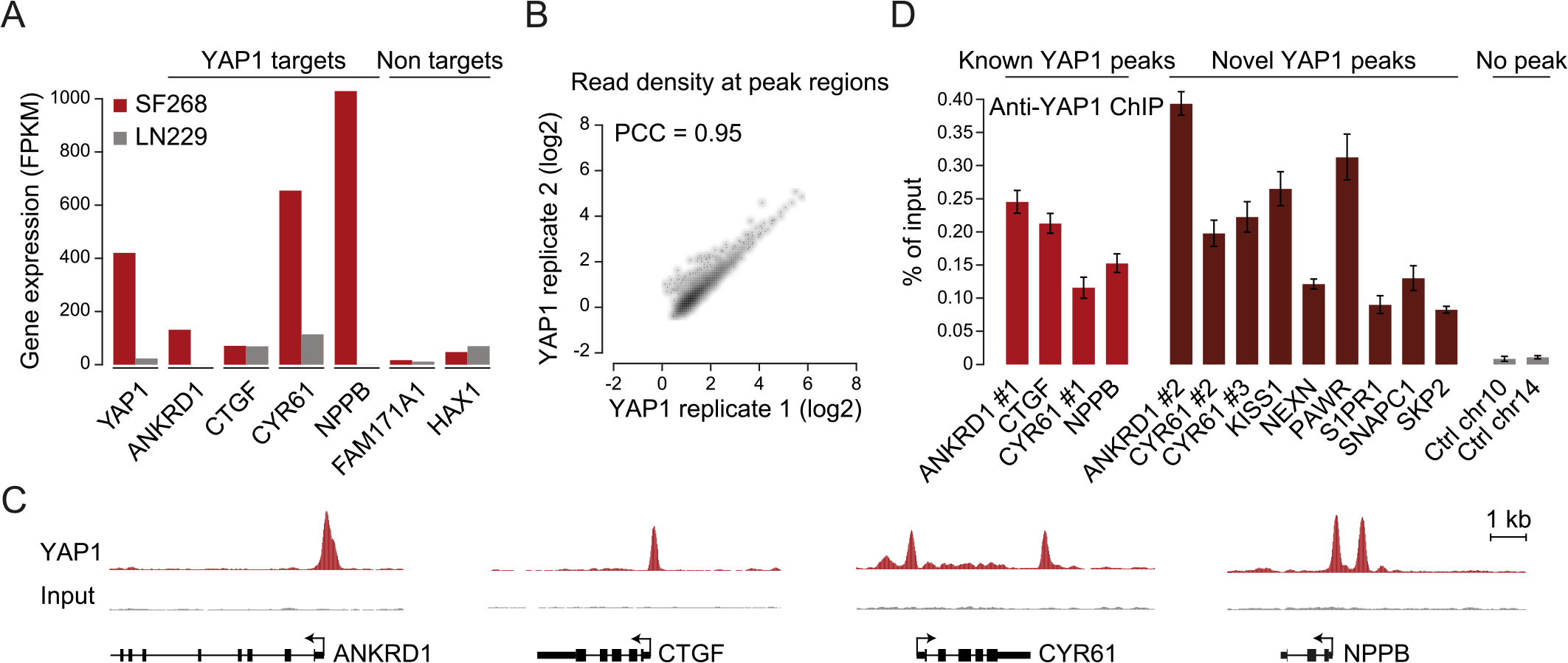 Genome-wide binding of YAP1 to chromatin in SF268 cells.