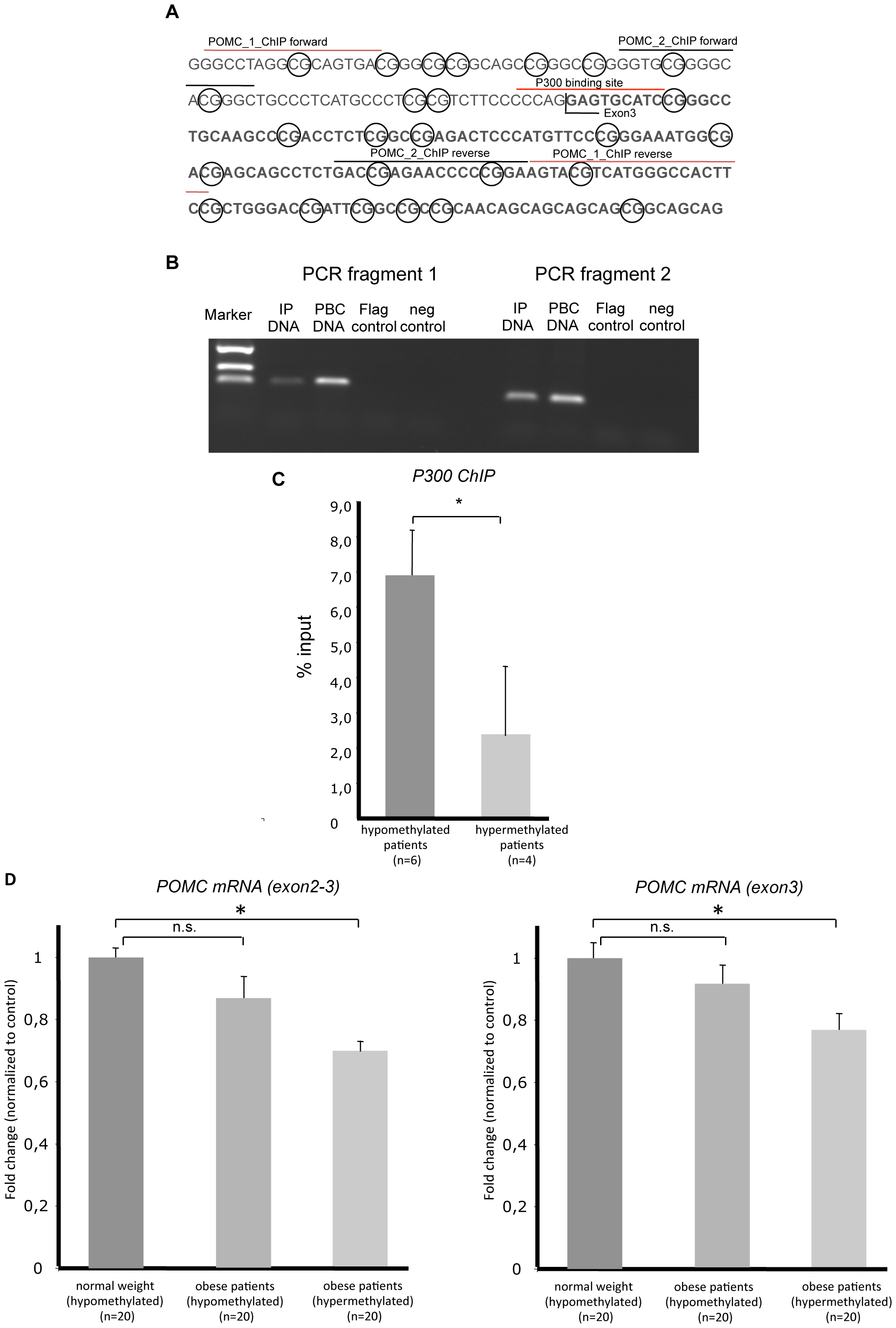 <i>POMC</i> intron2 exon3 genomic sequence, P300 ChIP assay, real-time PCR analysis, and real-time <i>POMC</i> PCR.