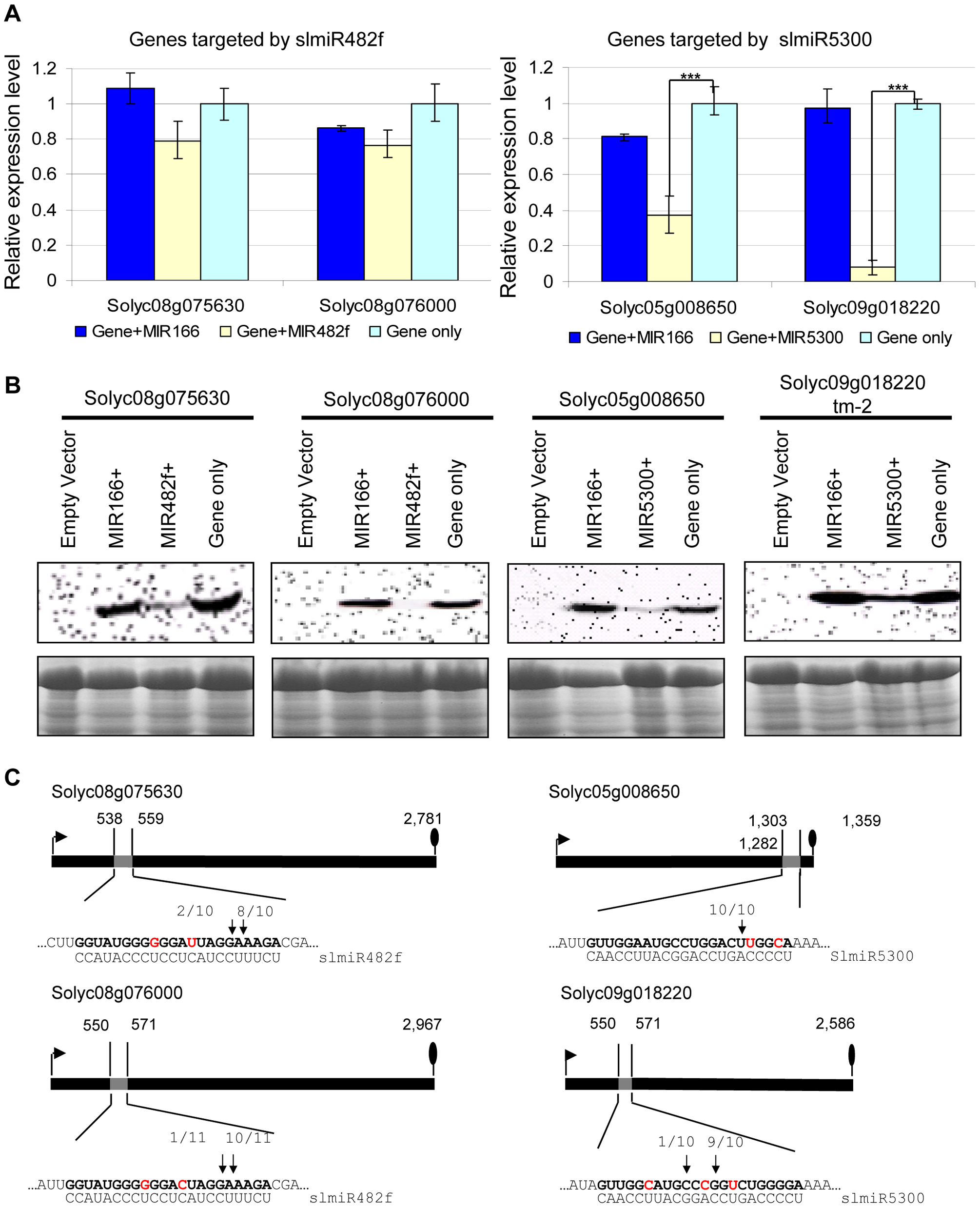Co-expression of slmiRNAs and predicted targets in <i>Nicotiana benthamiana</i> leaves.