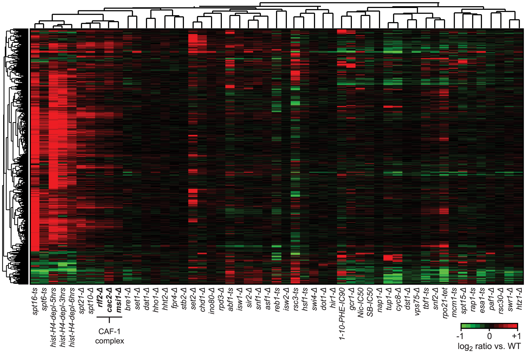 Cryptic antisense transcripts in CAF-1 complex mutants.