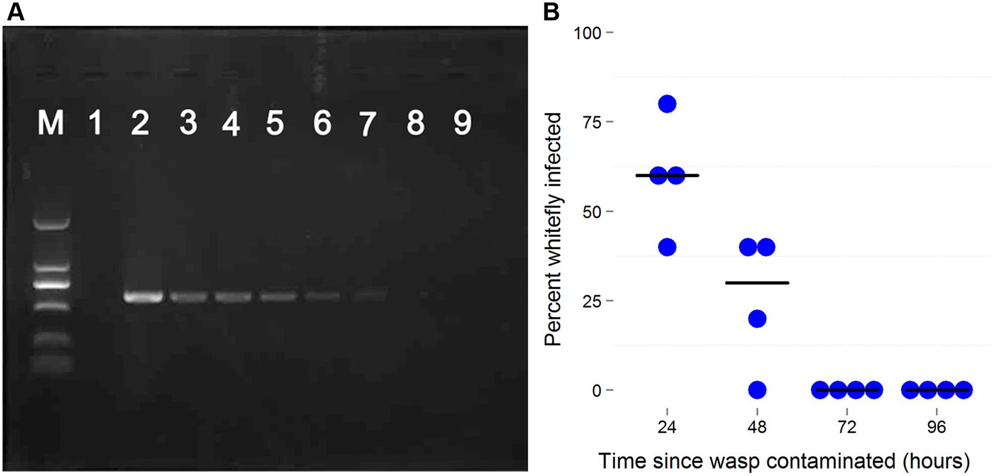 The persistence of newly-acquired <i>Wolbachia</i> in parasitoids.