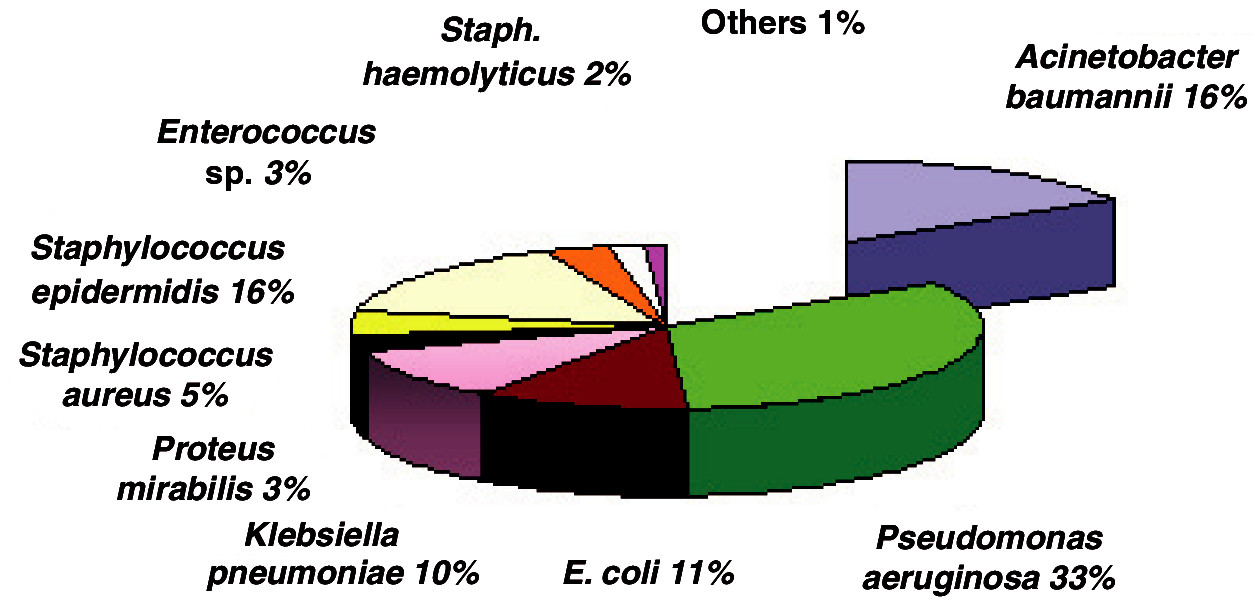 Incidence of bacterial strains in ICU in 2006