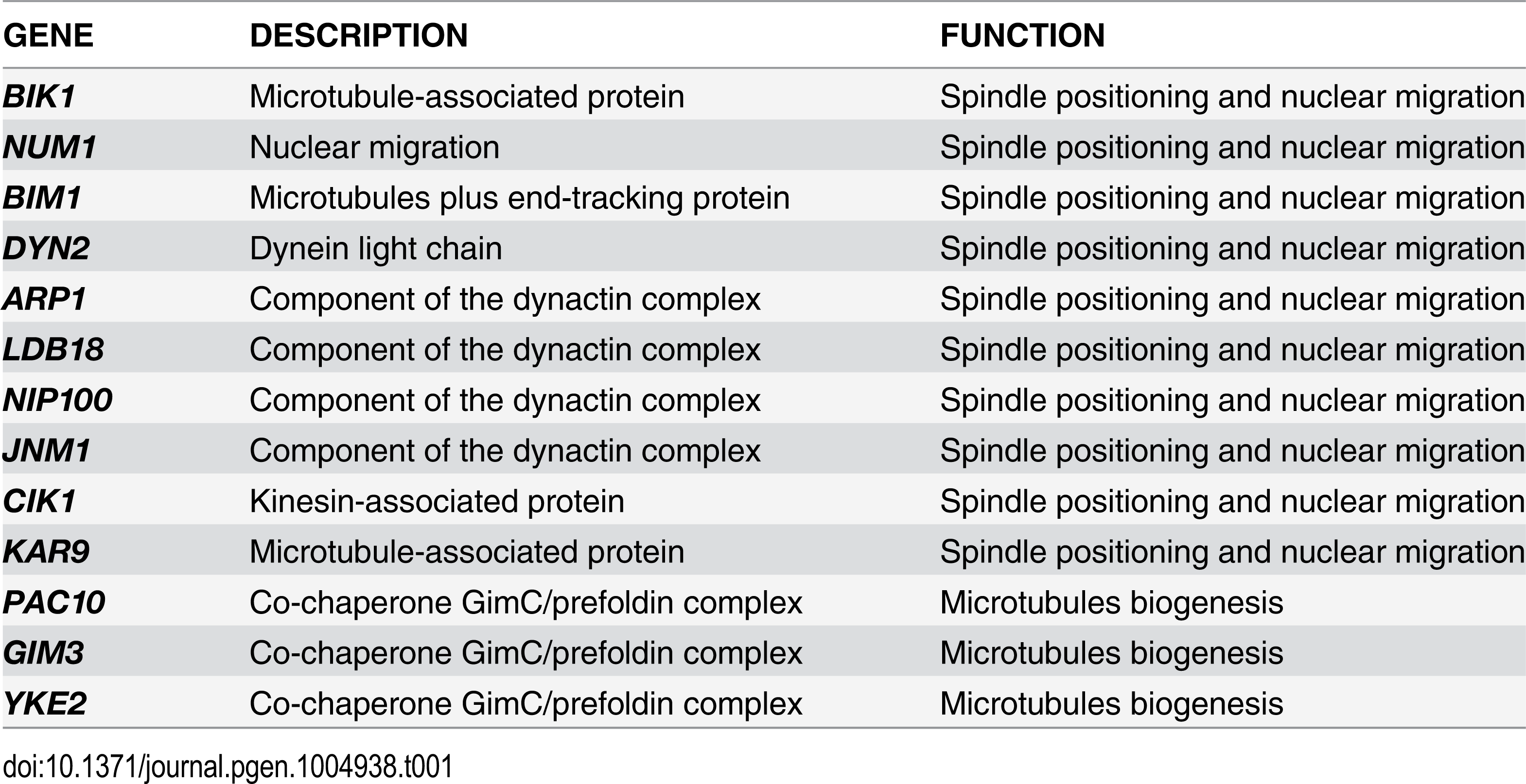 List of non-essential genes implicated in microtubules dynamics or spindle positioning identified in the SGA screen with <i>TEM1-Q79L</i>.