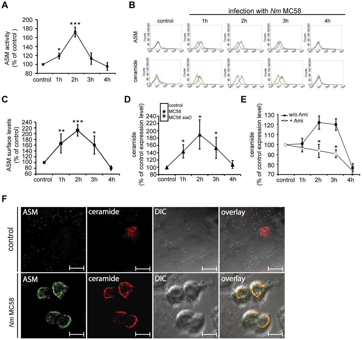 <i>N. meningitidis</i> infection activates ASM and causes membrane ceramide accumulation on HBMEC.