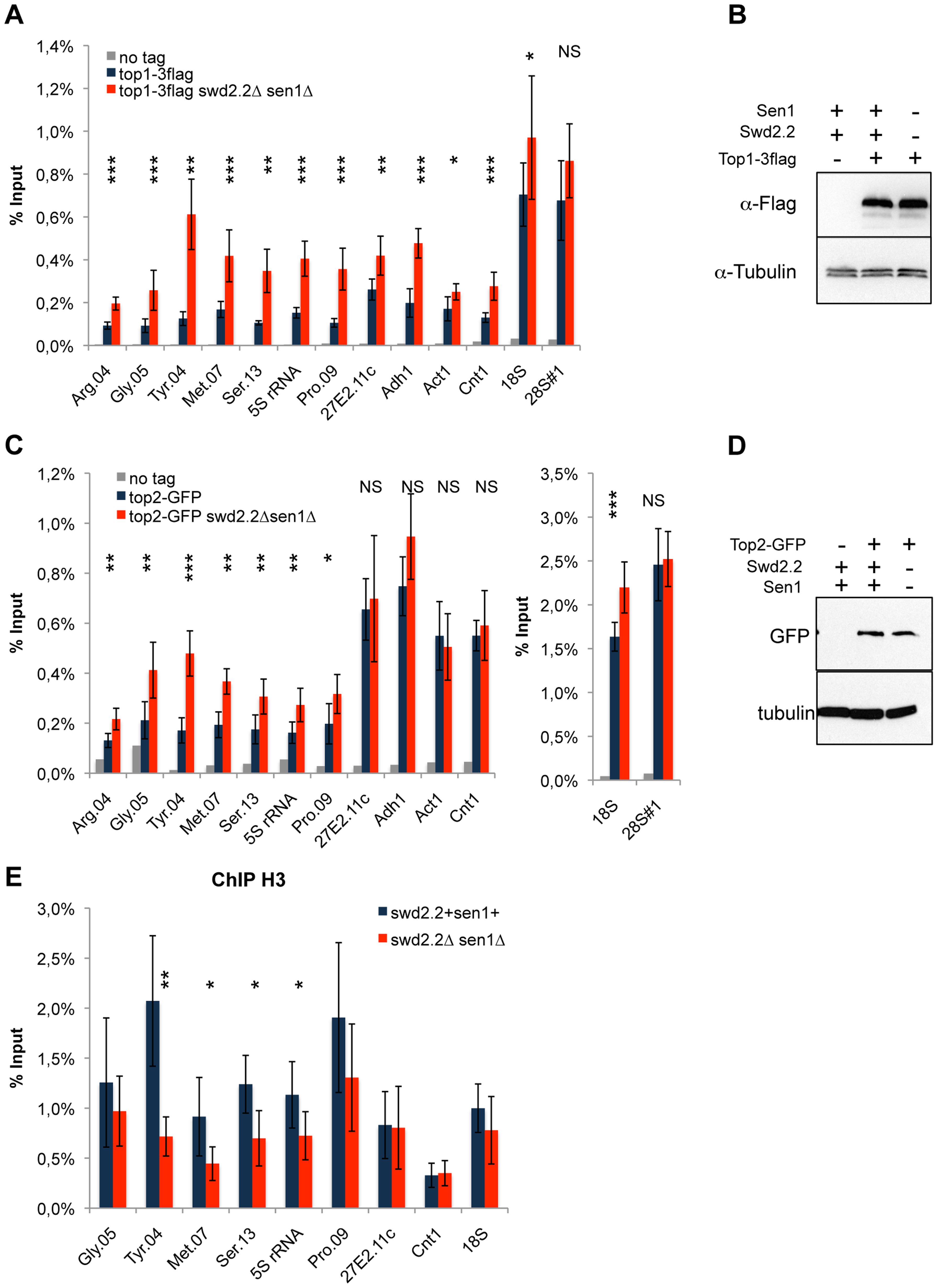 Lack of Swd2.2 and Sen1 results in local topological stress at Pol III-transcribed genes.