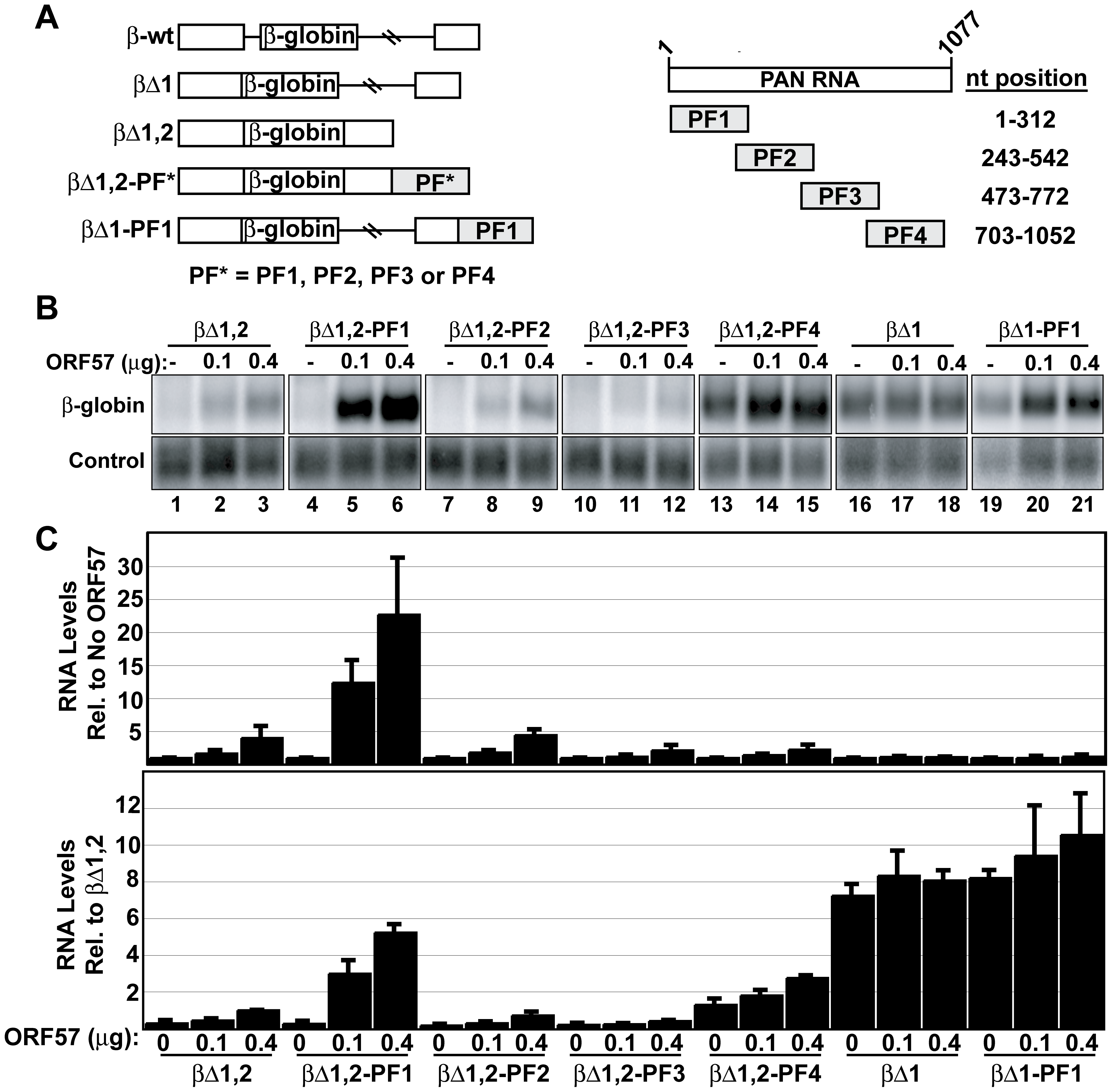 The ORE is sufficient to confer ORF57 responsiveness to an intronless mRNA.