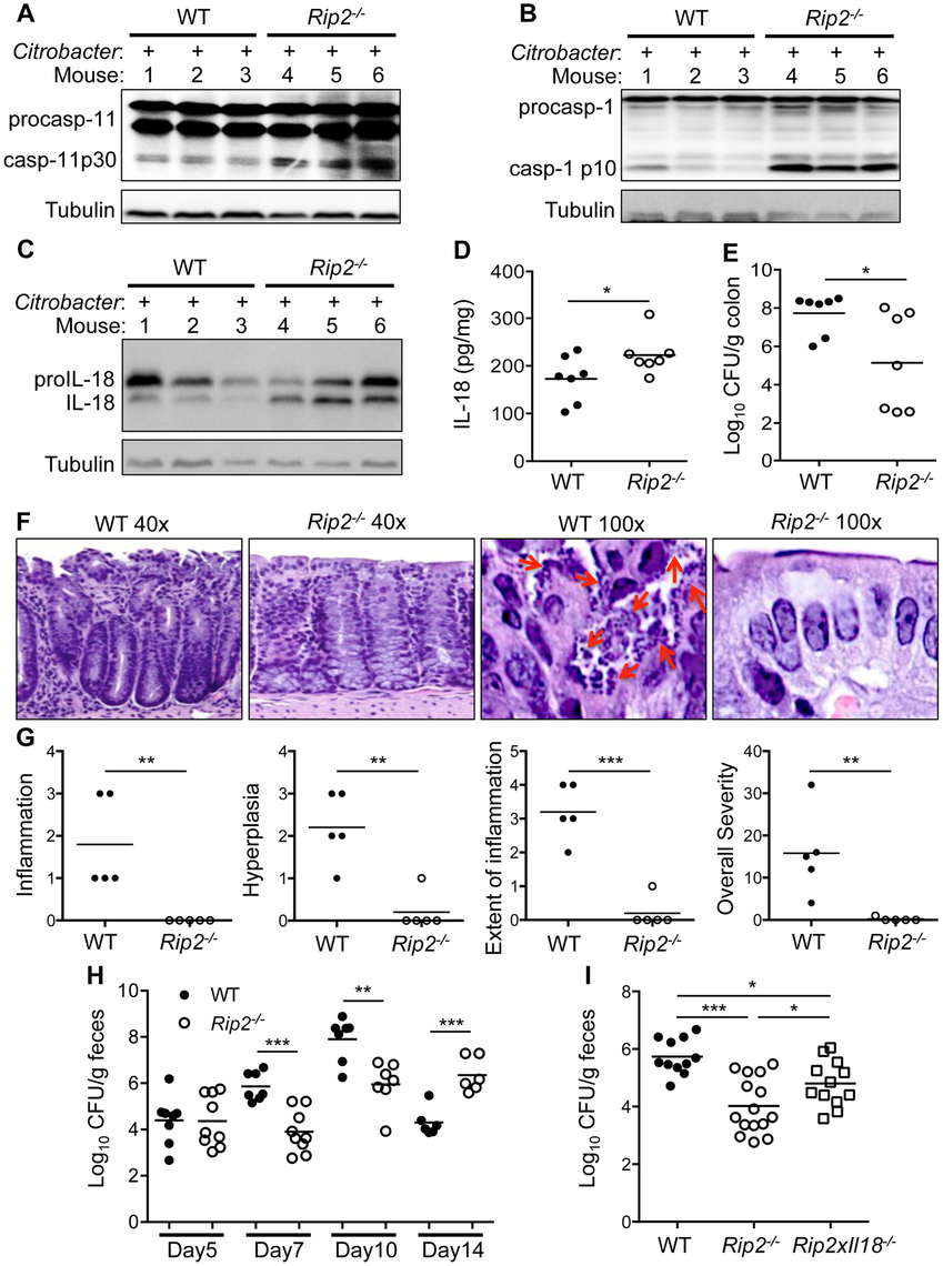 Enhanced inflammasome activation results in protection <i>in vivo</i>.