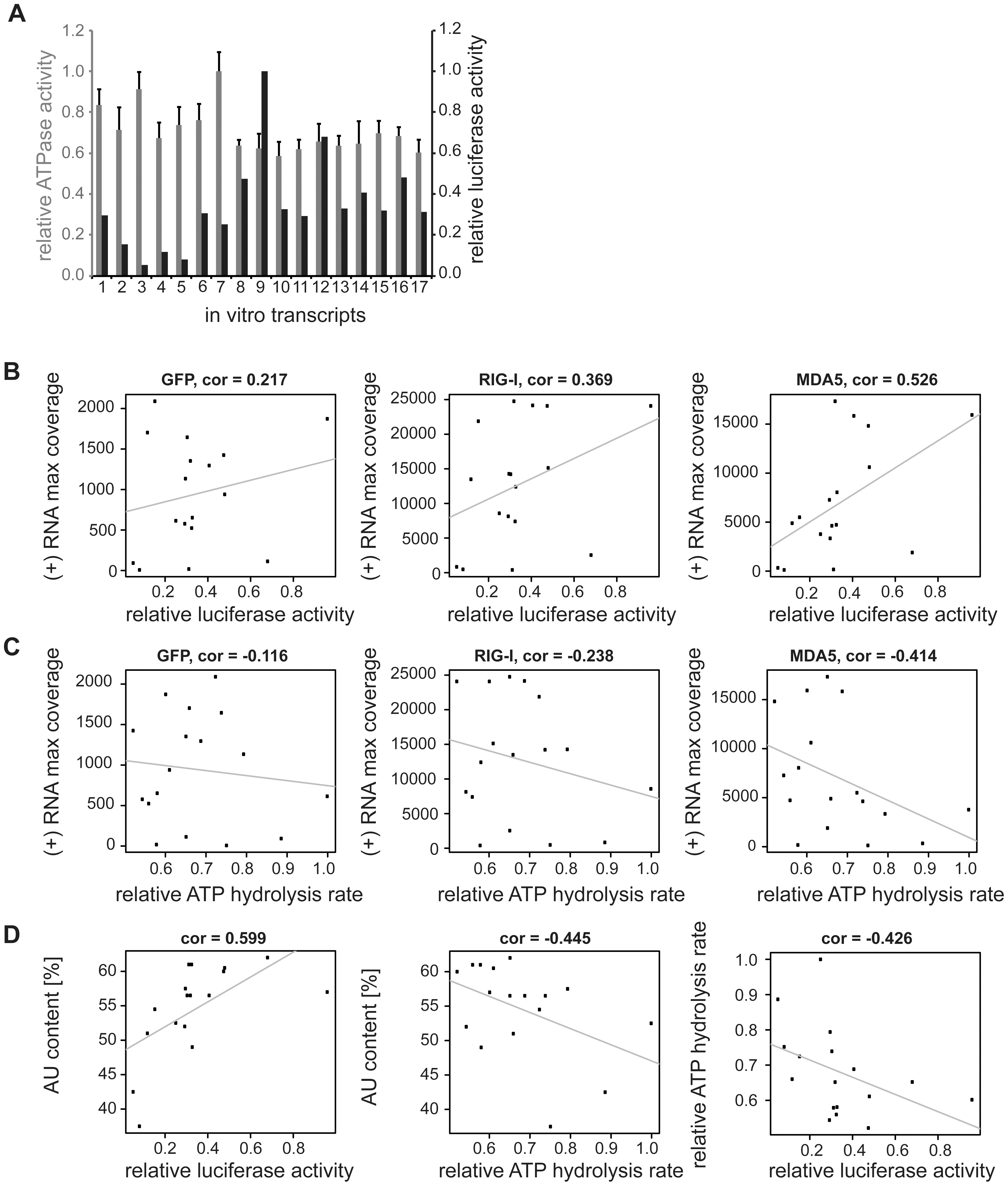 Analysis of <i>in vitro</i> transcribed RNA of the measles virus genome.