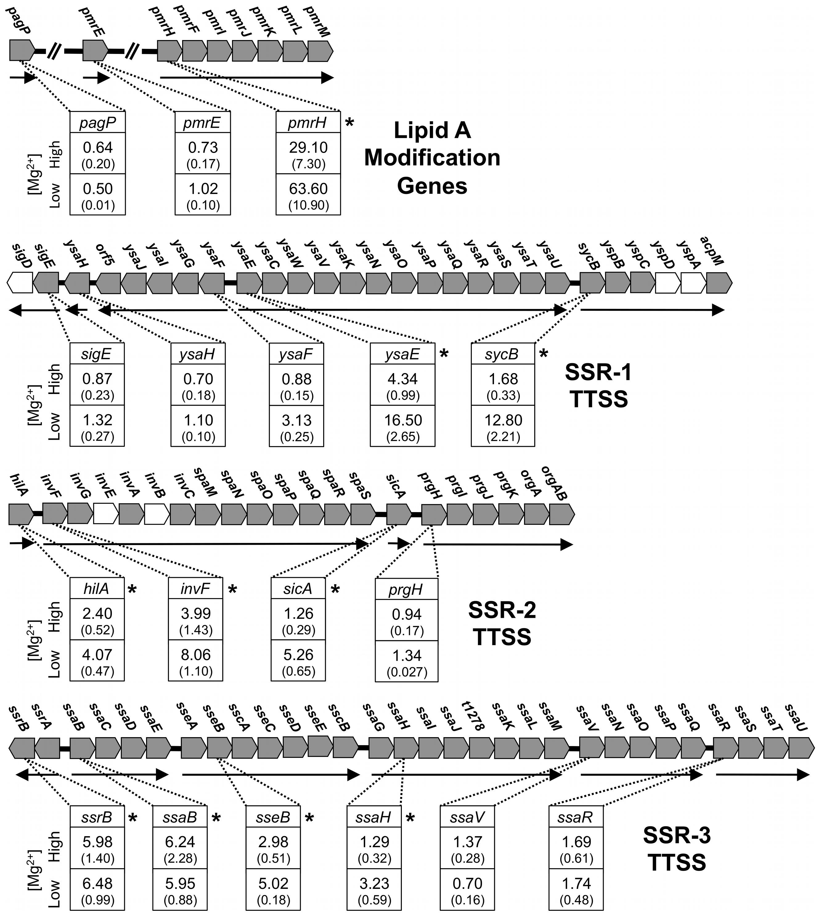 Quantitative PCR analysis of transcripts derived from genes involved in lipid A modifications in <i>S. glossinidius</i>.